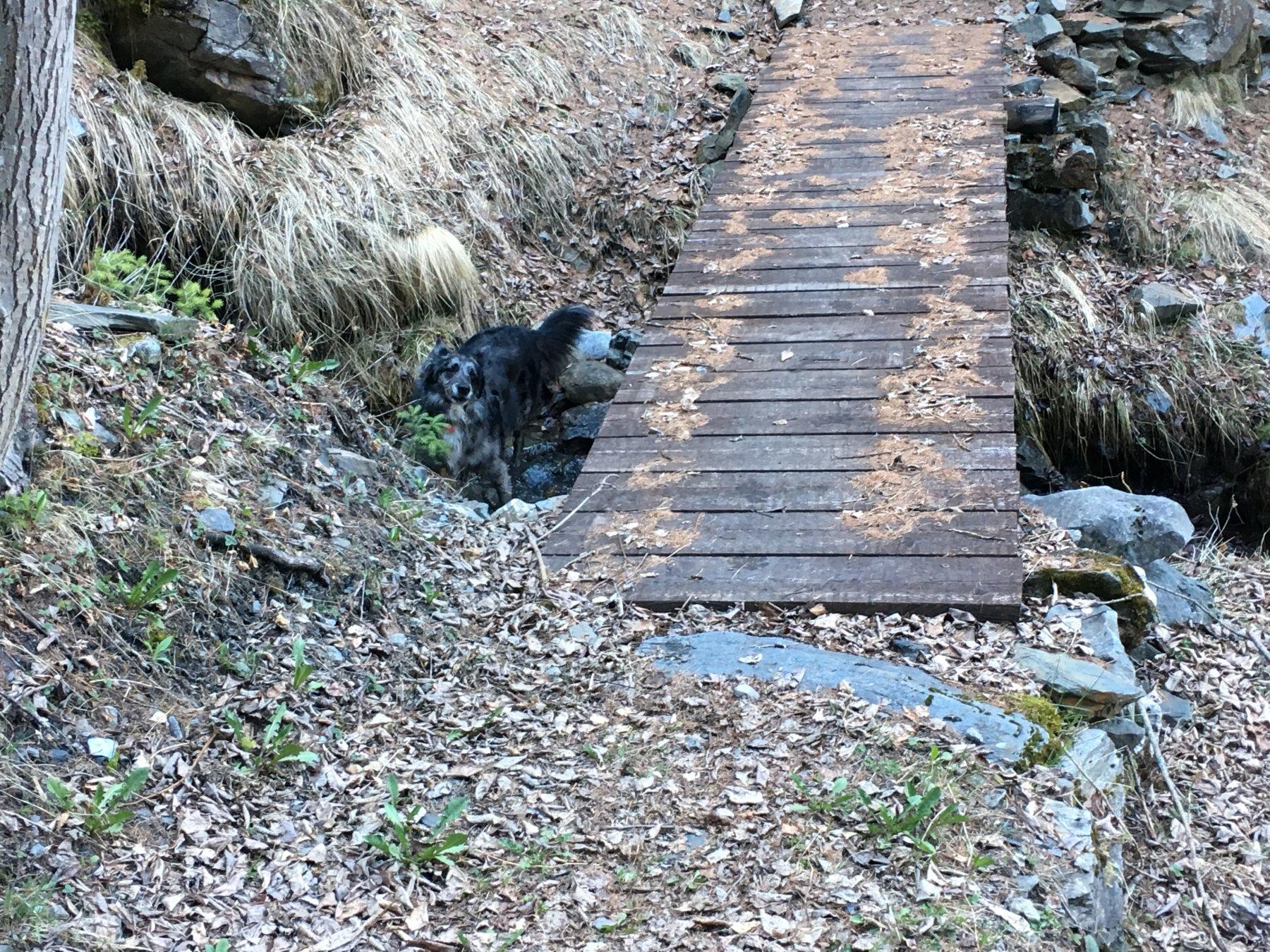 Sul sentiero 1b, al ponte alla partenza da Charvaz. E finalmente si beve ….