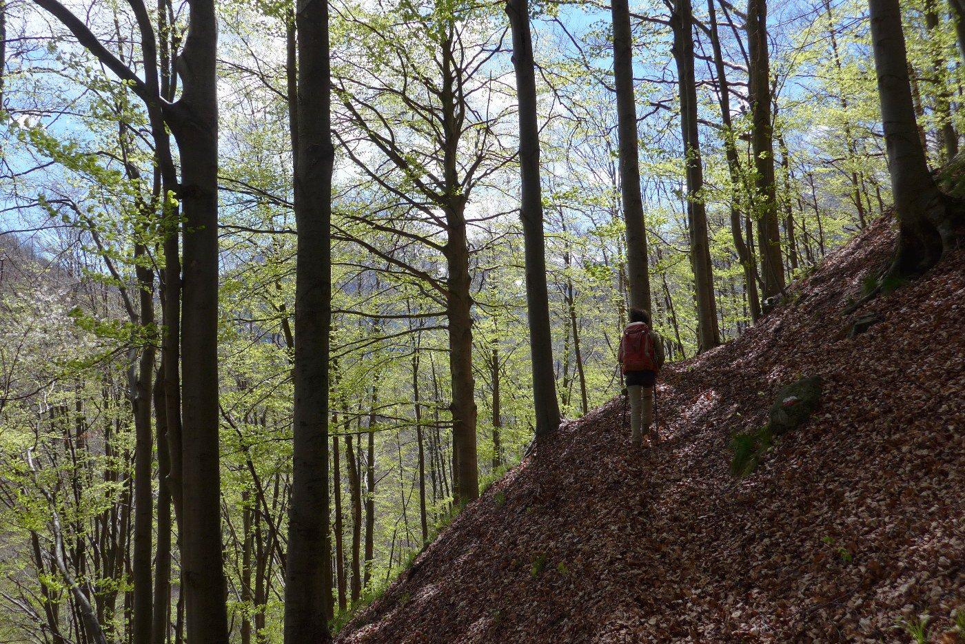 Nel bosco sotto Inversigni