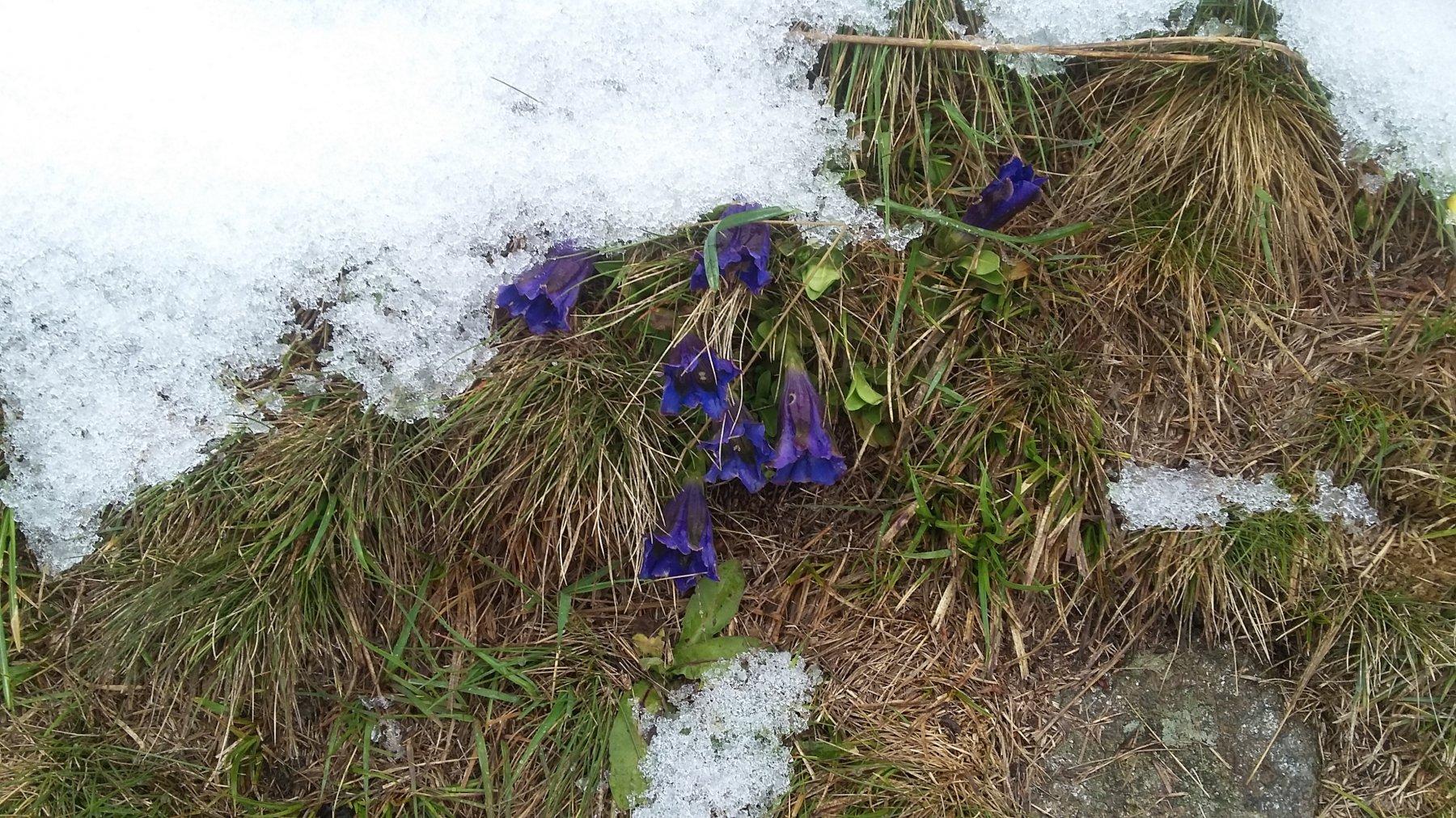 piegate dalla neve