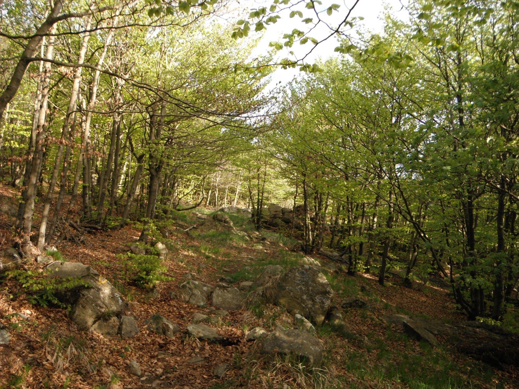 Il sentiero che scende al Dano