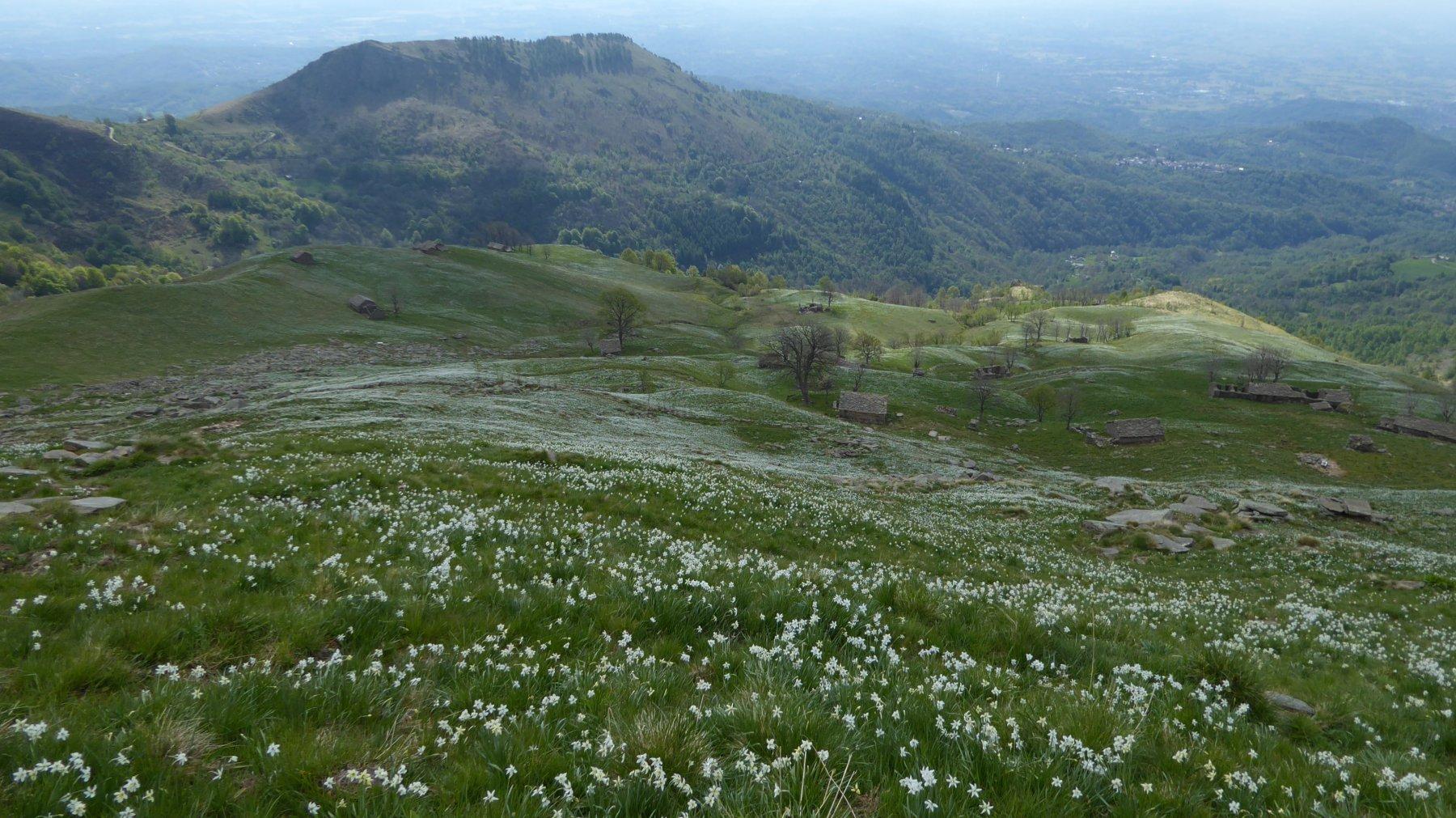 Vista dall'alto del pianoro di Vasivressa