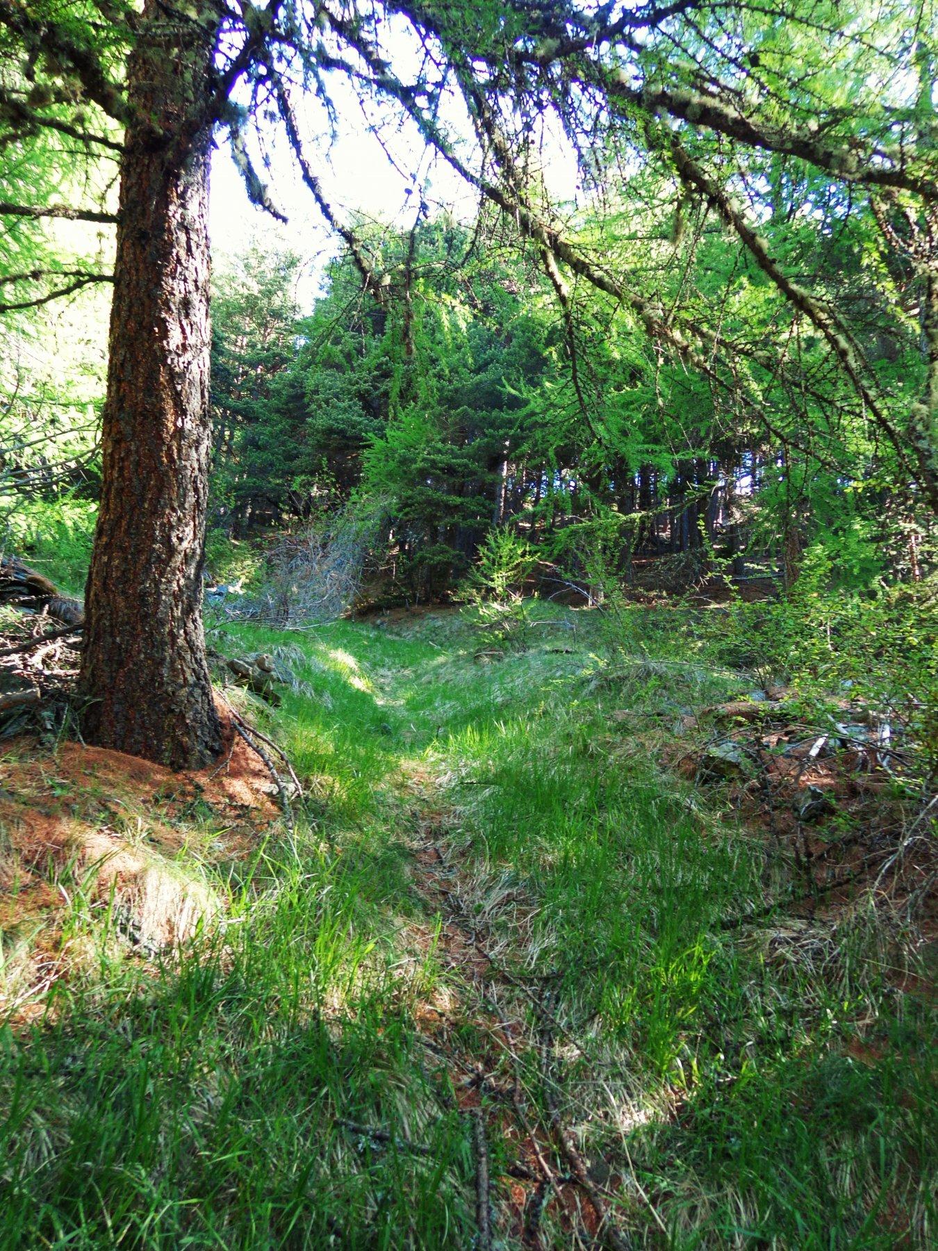 Inizio percorso nel bosco