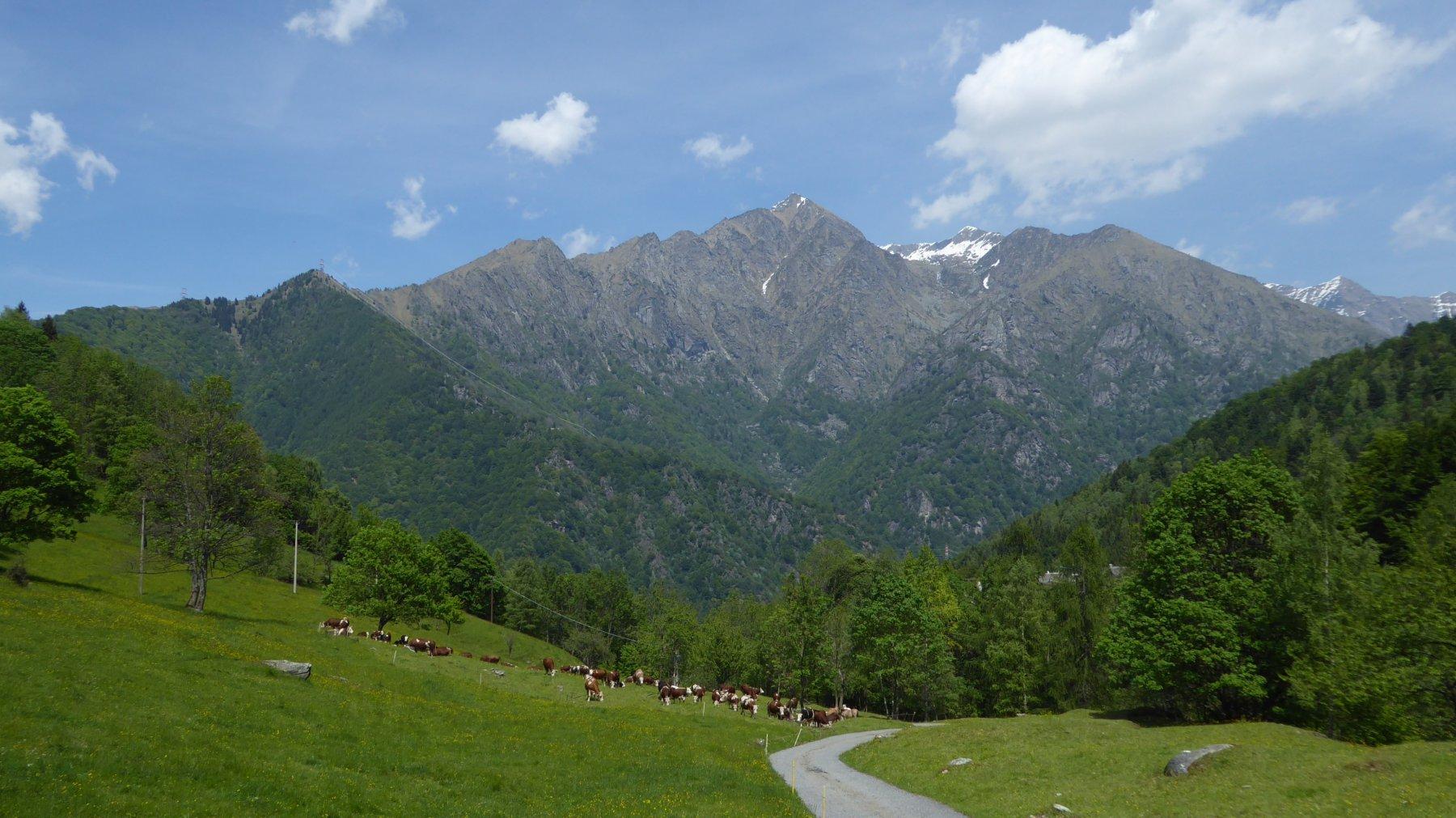Mandria al Pascolo a Guaria, con sfondo il Vallone di Canaussa
