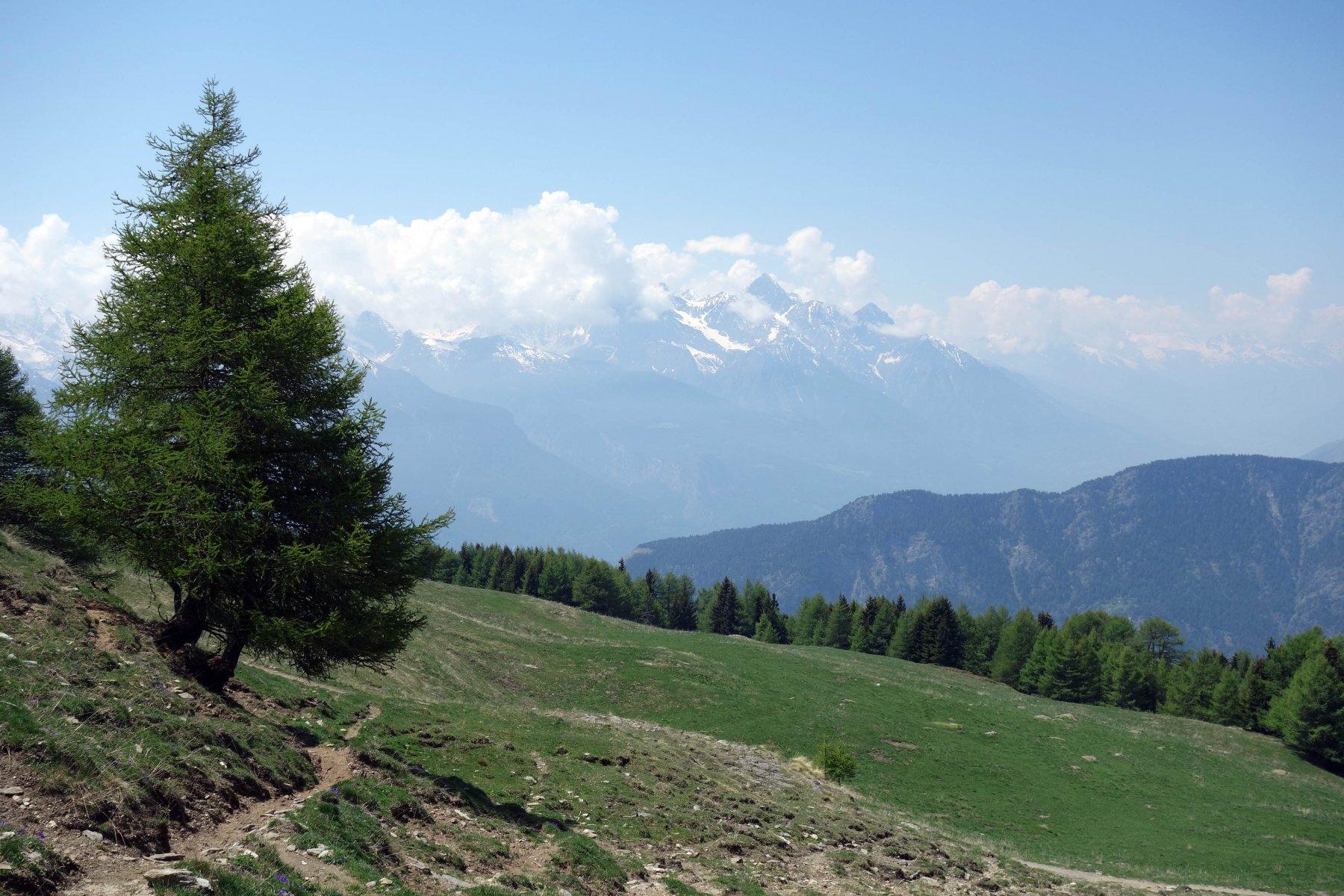 Emilius dall'alpeggio Francou