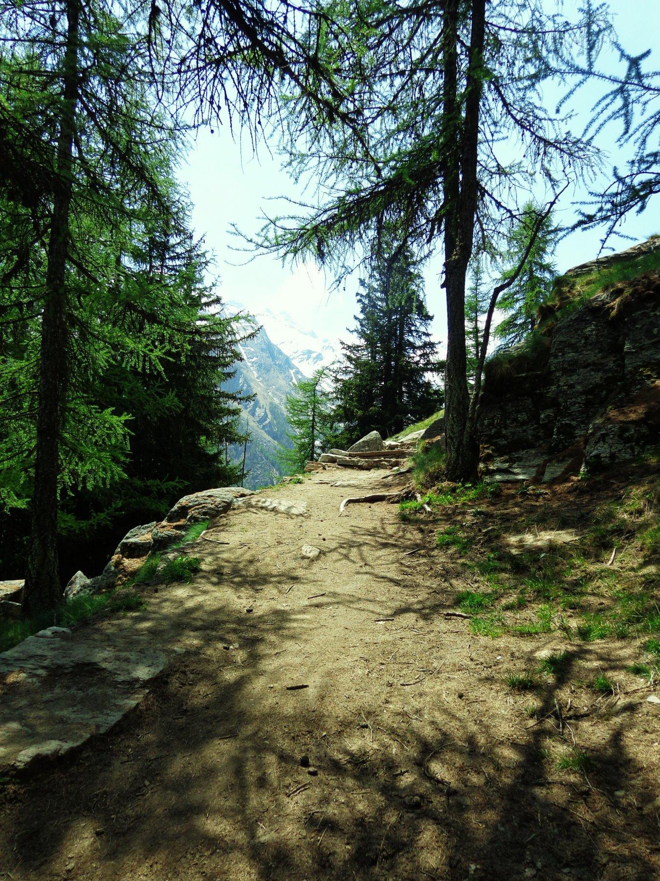 Il sentiero nuovo che porta a sinistra