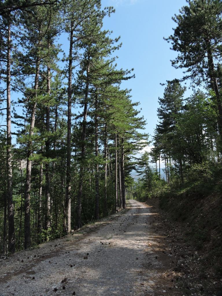 la pista forestale nella pineta
