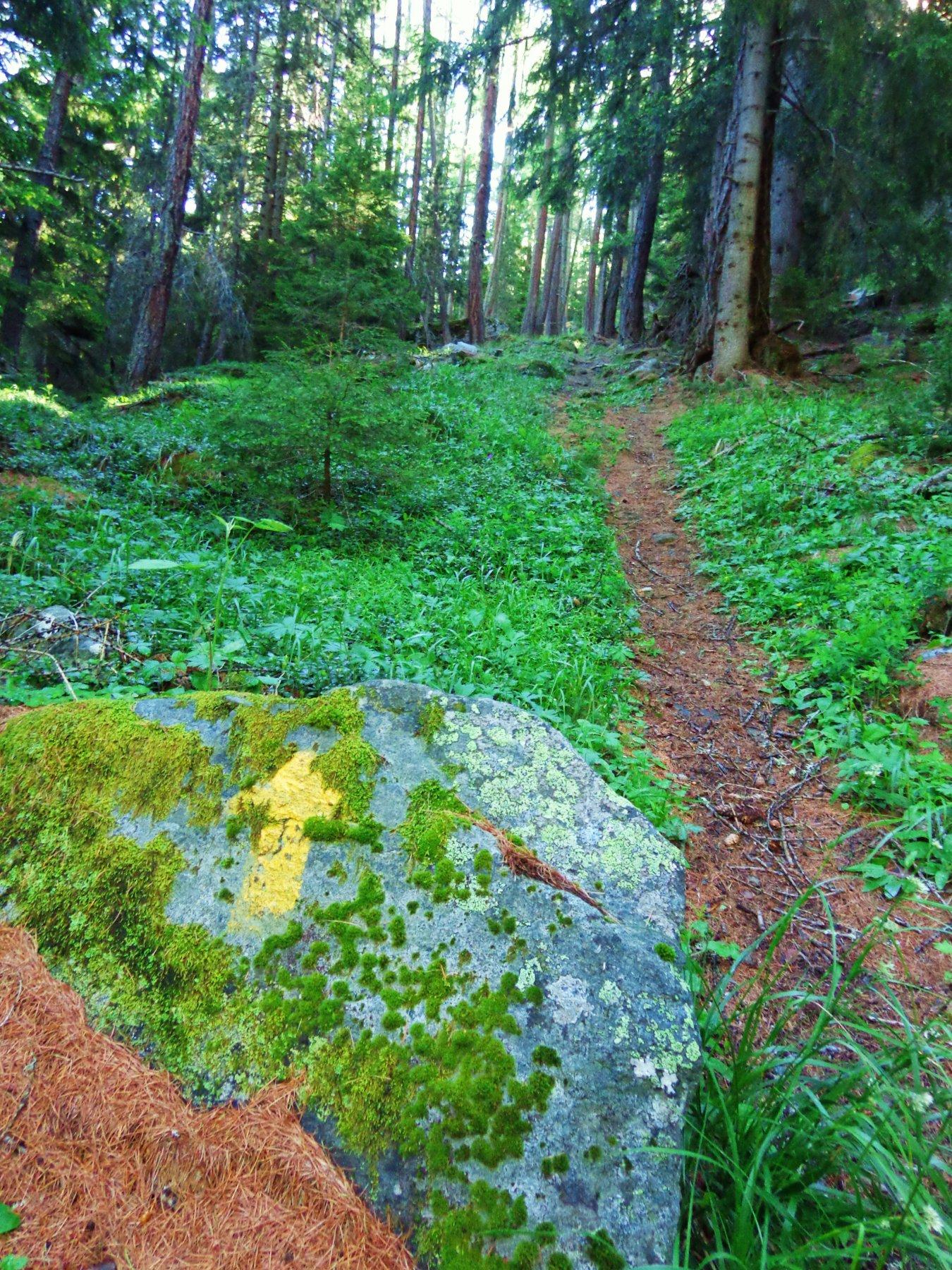 Salita ripida nel bosco