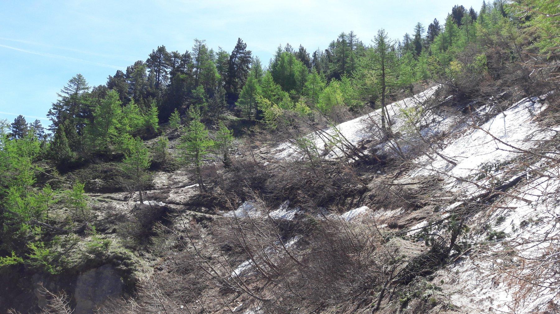 Unico tratto ostruito da neve e tronchi