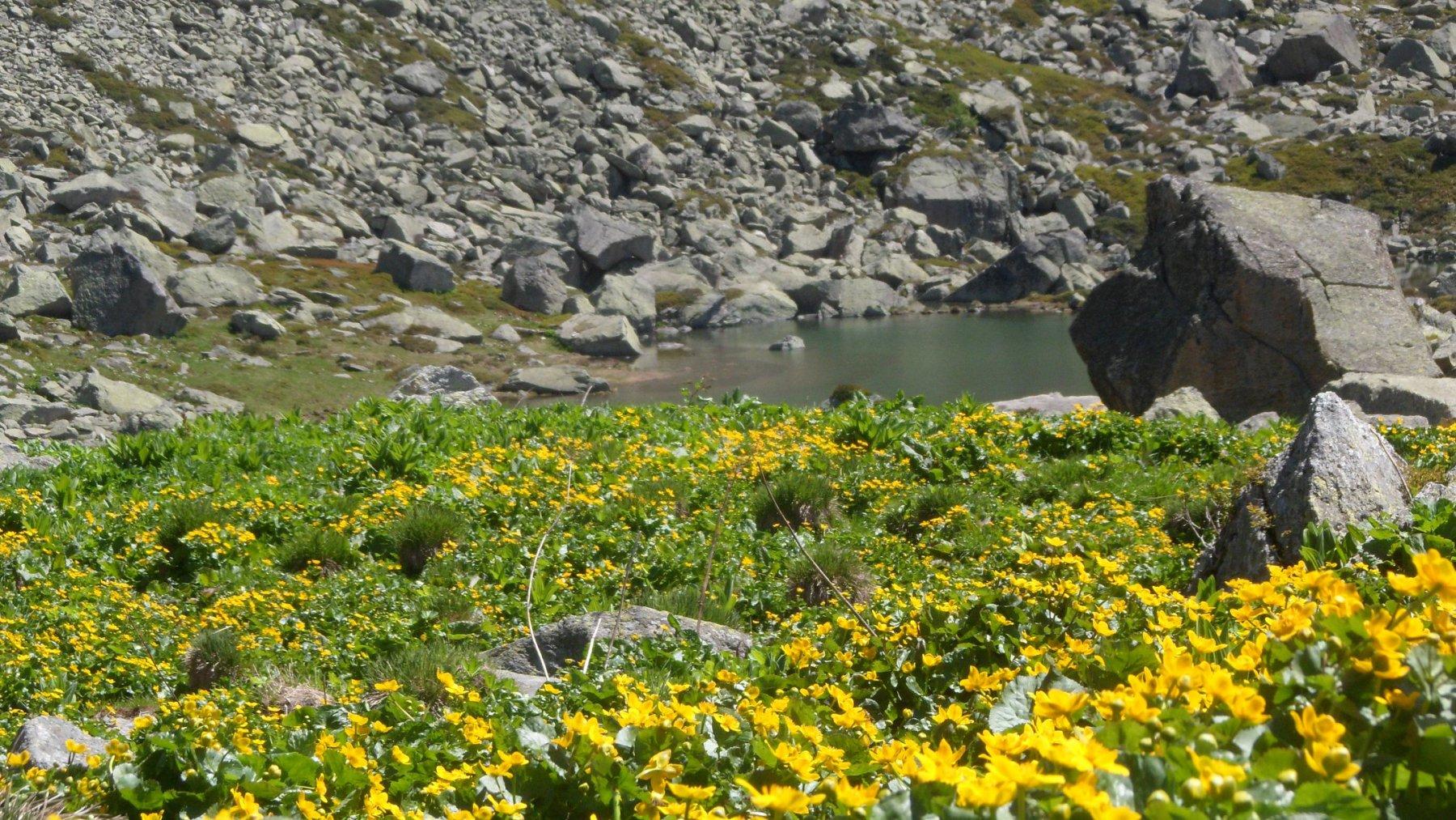 Fioritura ai laghi di Sagnasse