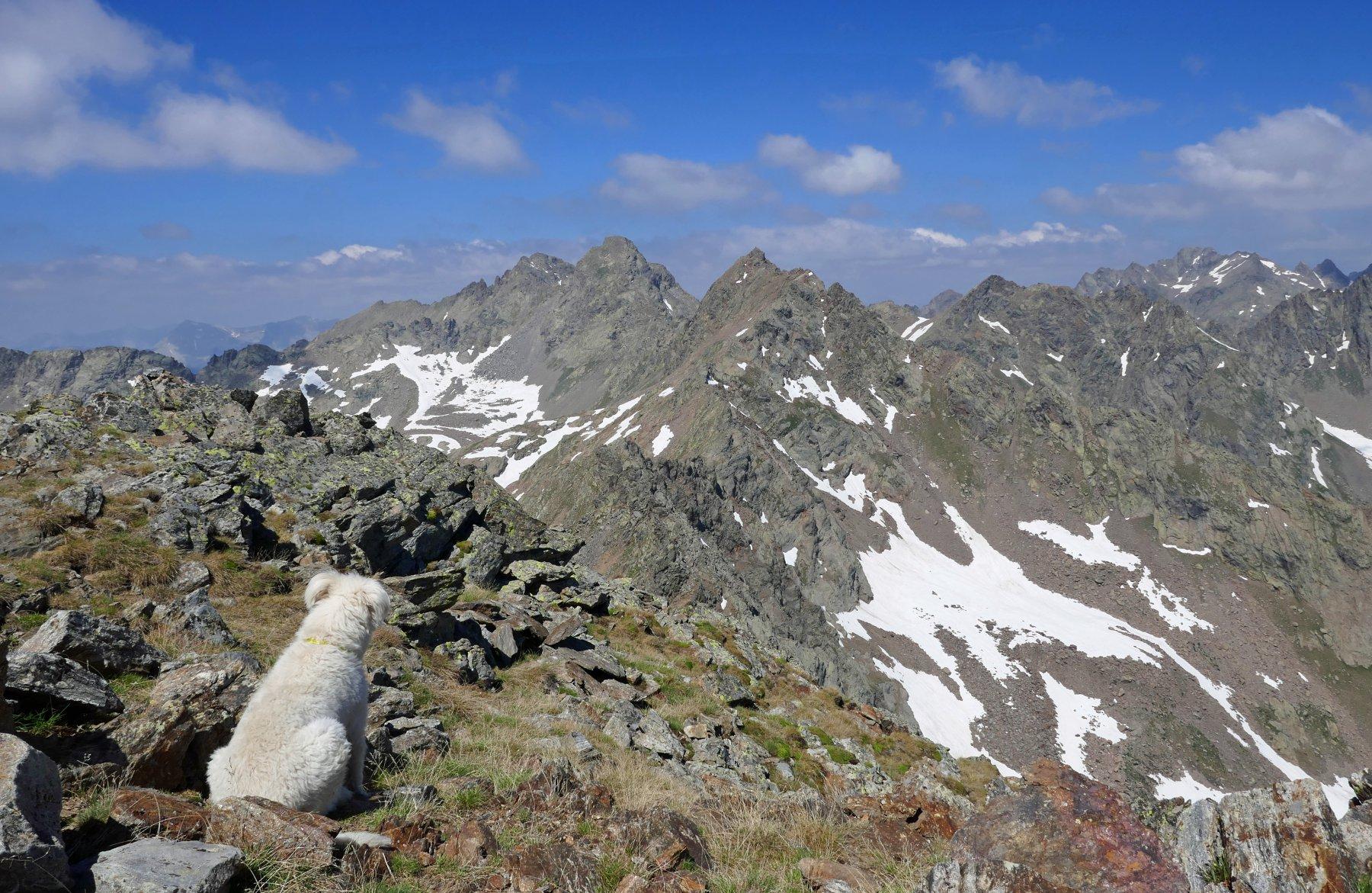 Buck sul Laroussa, bella vista sul Corborant, Giofreddo e sullo sfondo Tenìbres
