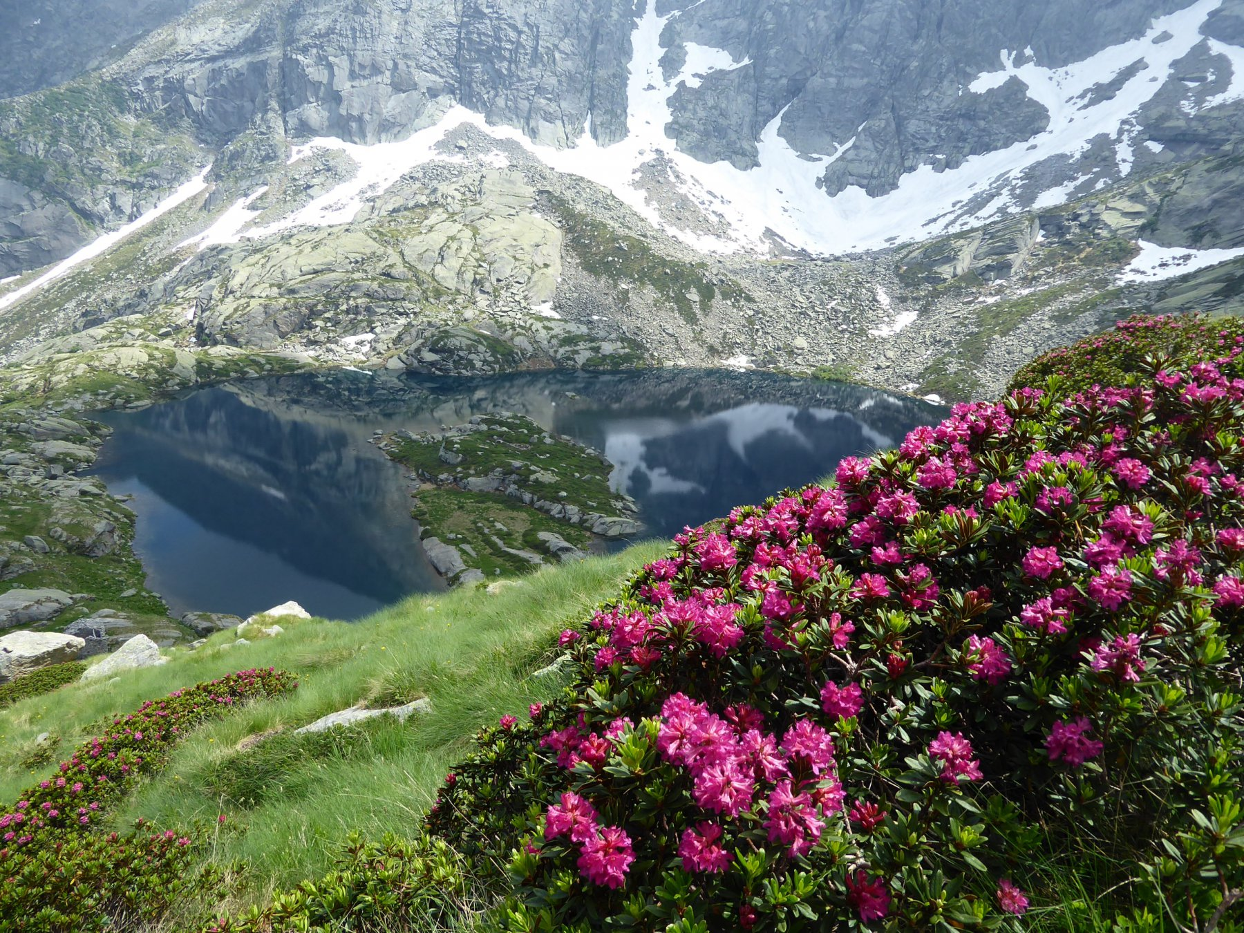 Rododendri e Lago Lasin