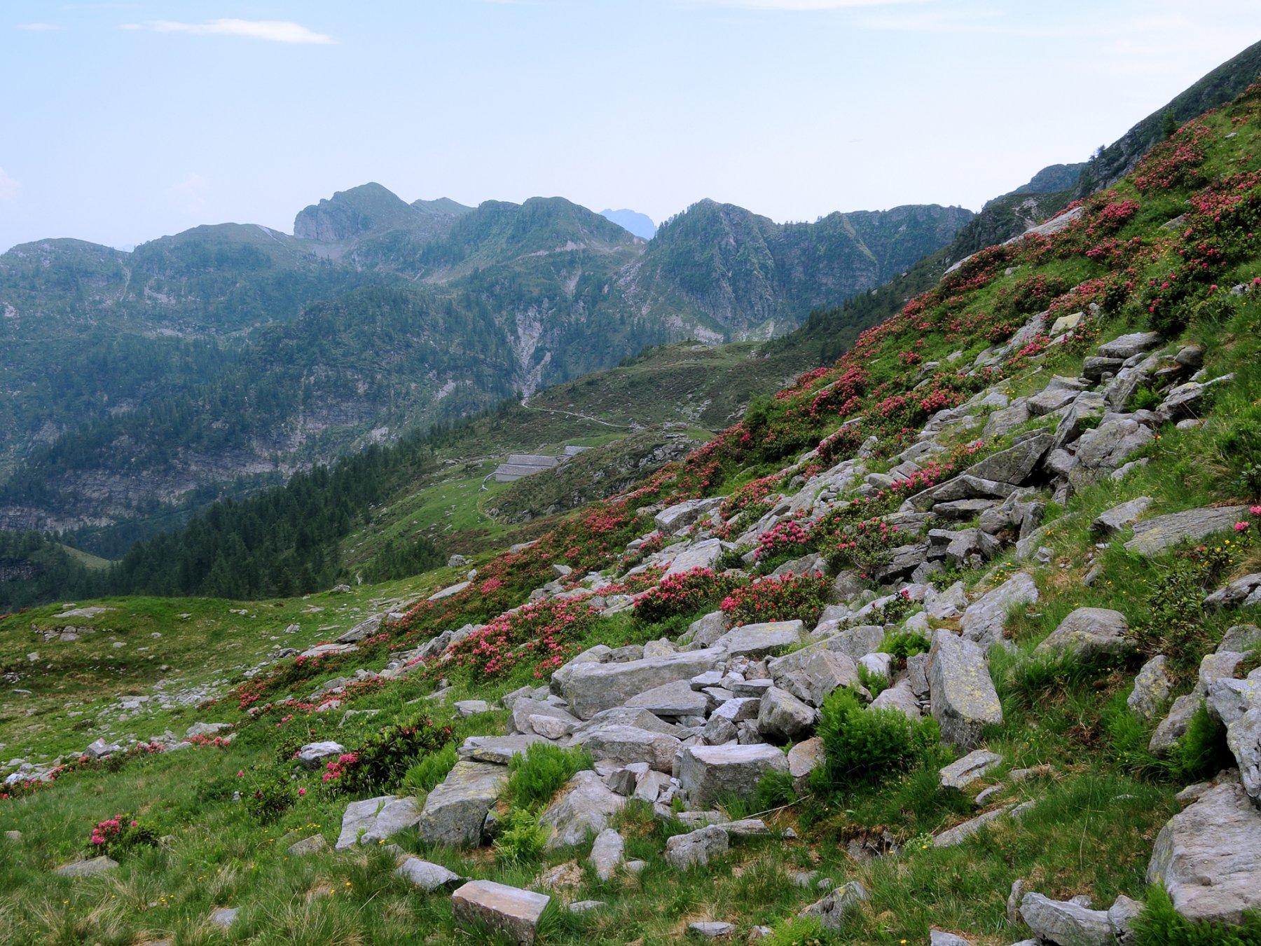 Bocchetta di Ruggia, versante Onsernone