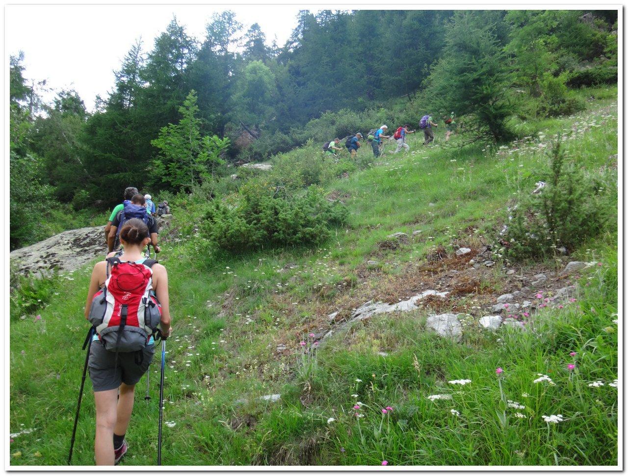 Inizio sentiero 14 nel bosco