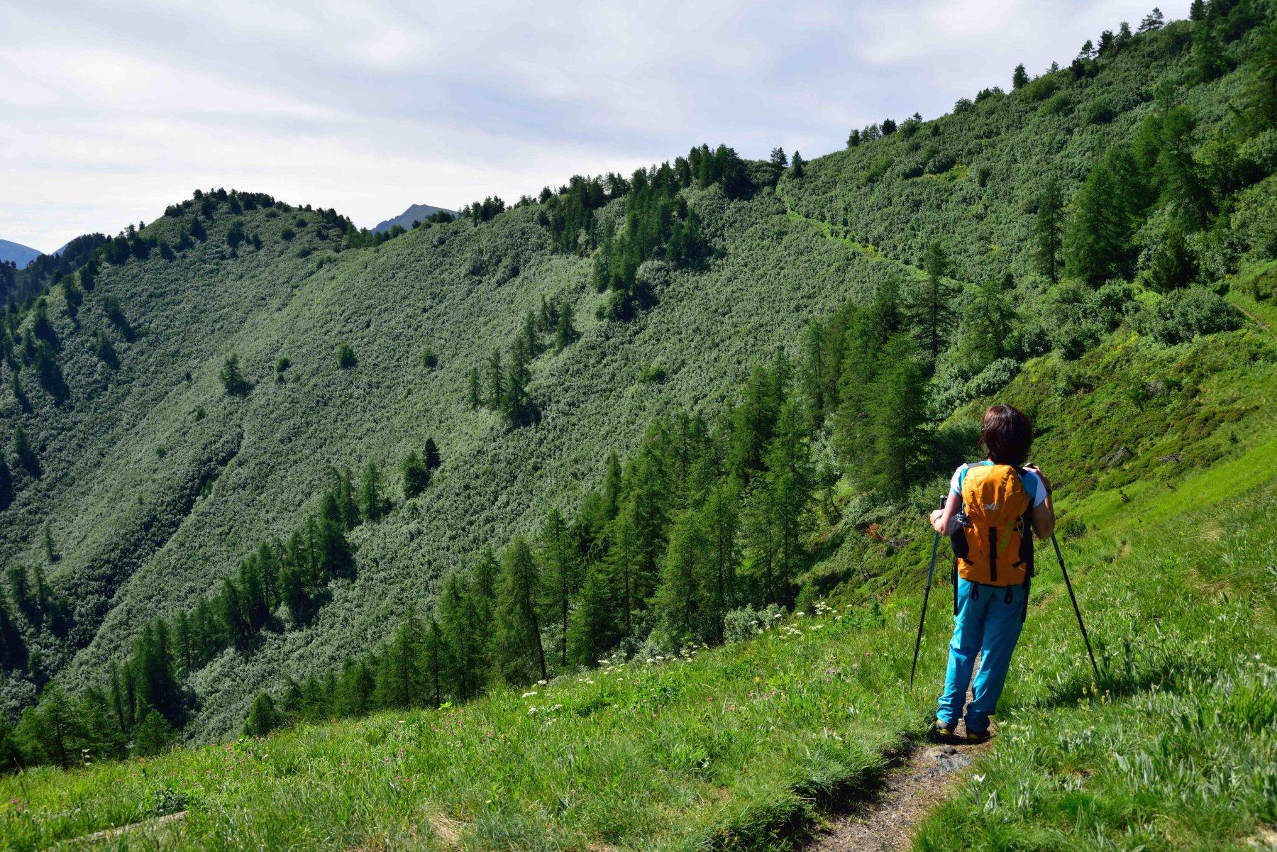 Ultimo tratto di sentiero verso il Colle della Battagliola