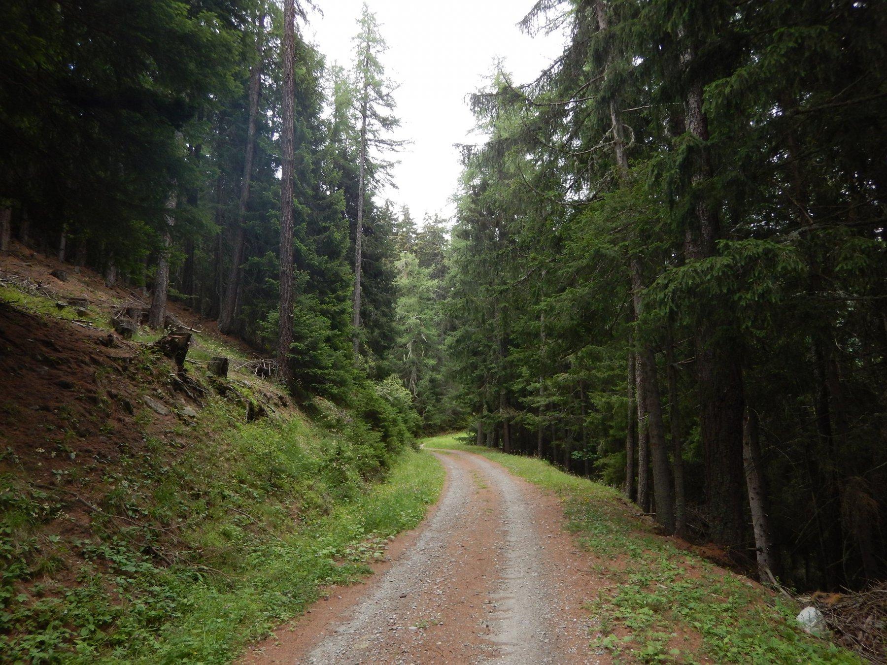 bella salita nel bosco