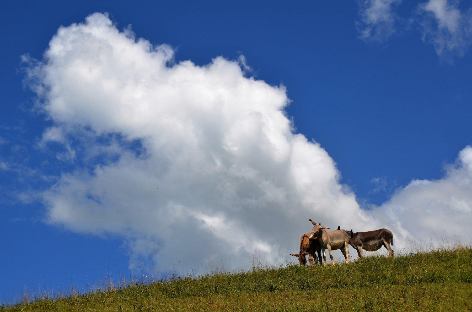 Alpeggi monte Alino