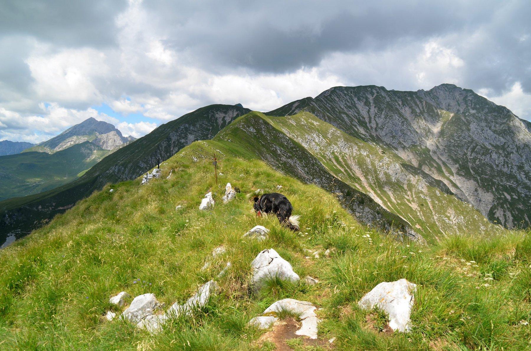 Crinale monte Secco. Dietro a sinistra l'Arera