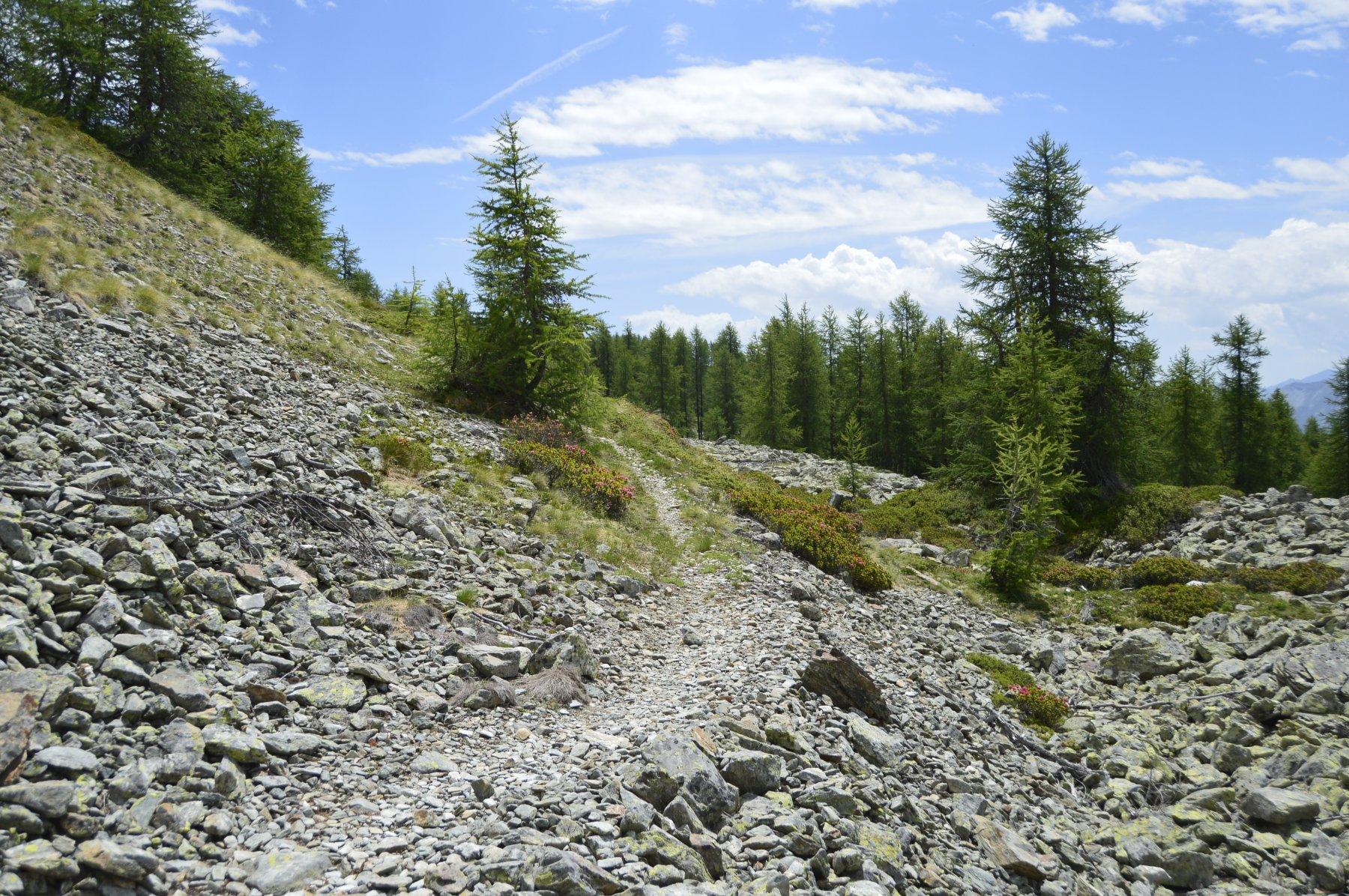 Sentiero natura basso (ce ne sono due)