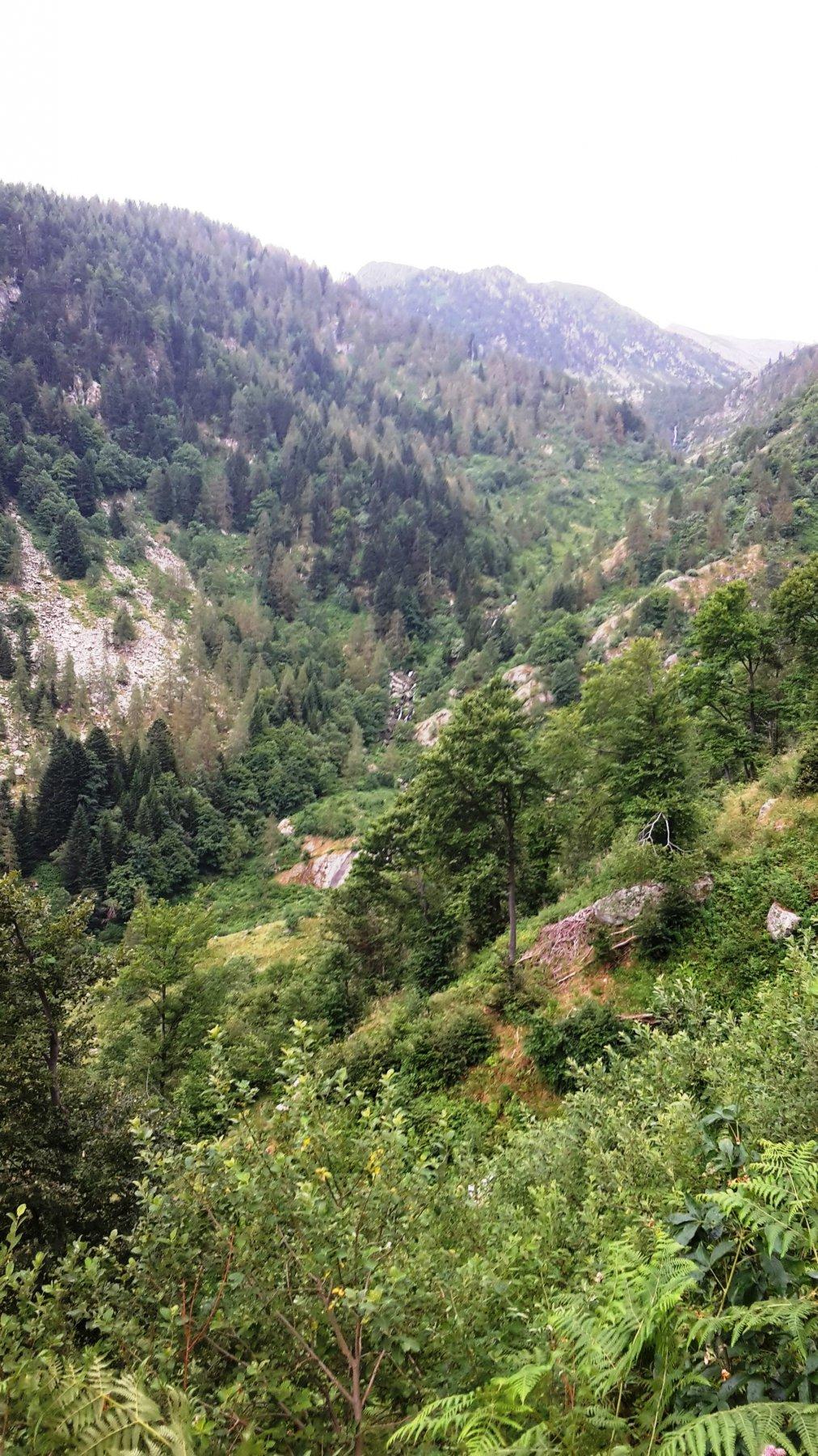 Panorama sulla Val Corsaglia, salendo alla Sella Piagna