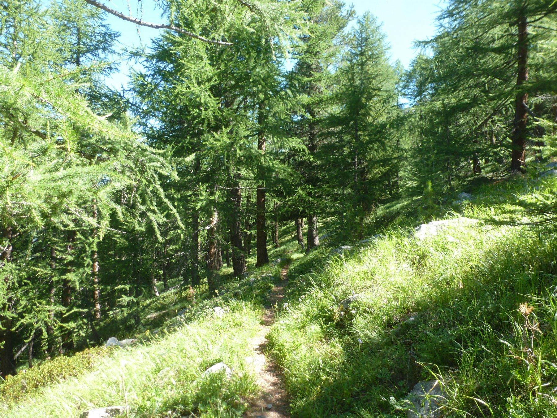 attraverso bei boschi
