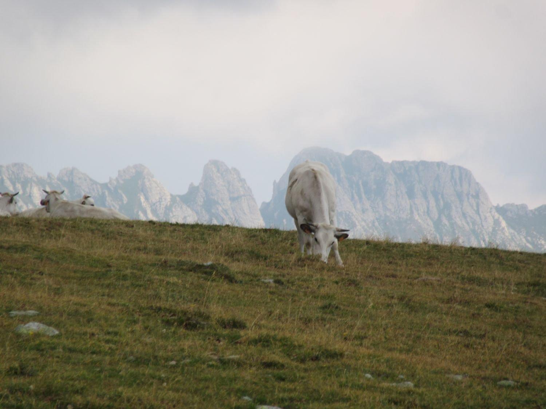Sembra di essere nelle Dolomiti ...