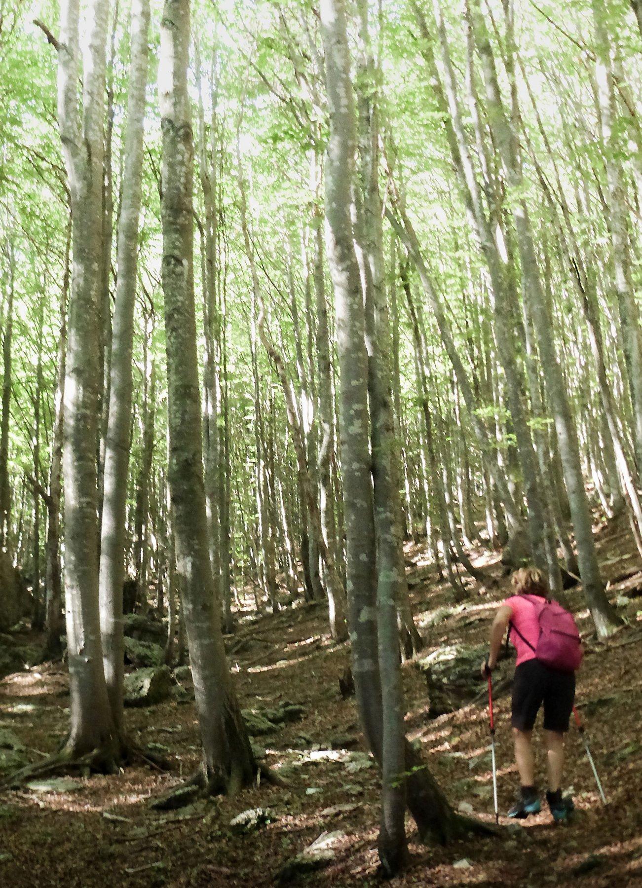 Nel bosco