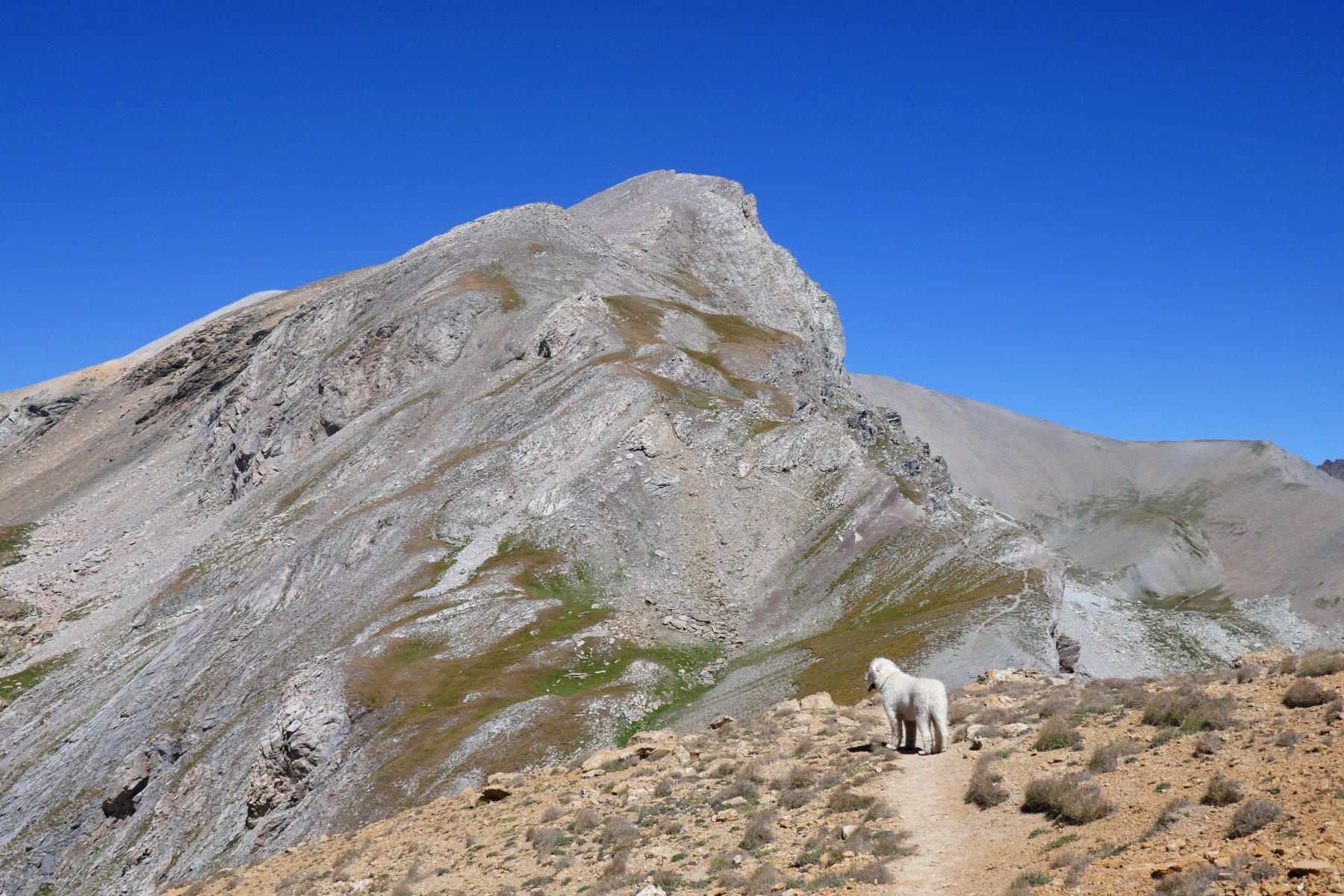 Buck alla Bassa di Terrarossa, sullo sfondo il tratto finale per il Maniglia