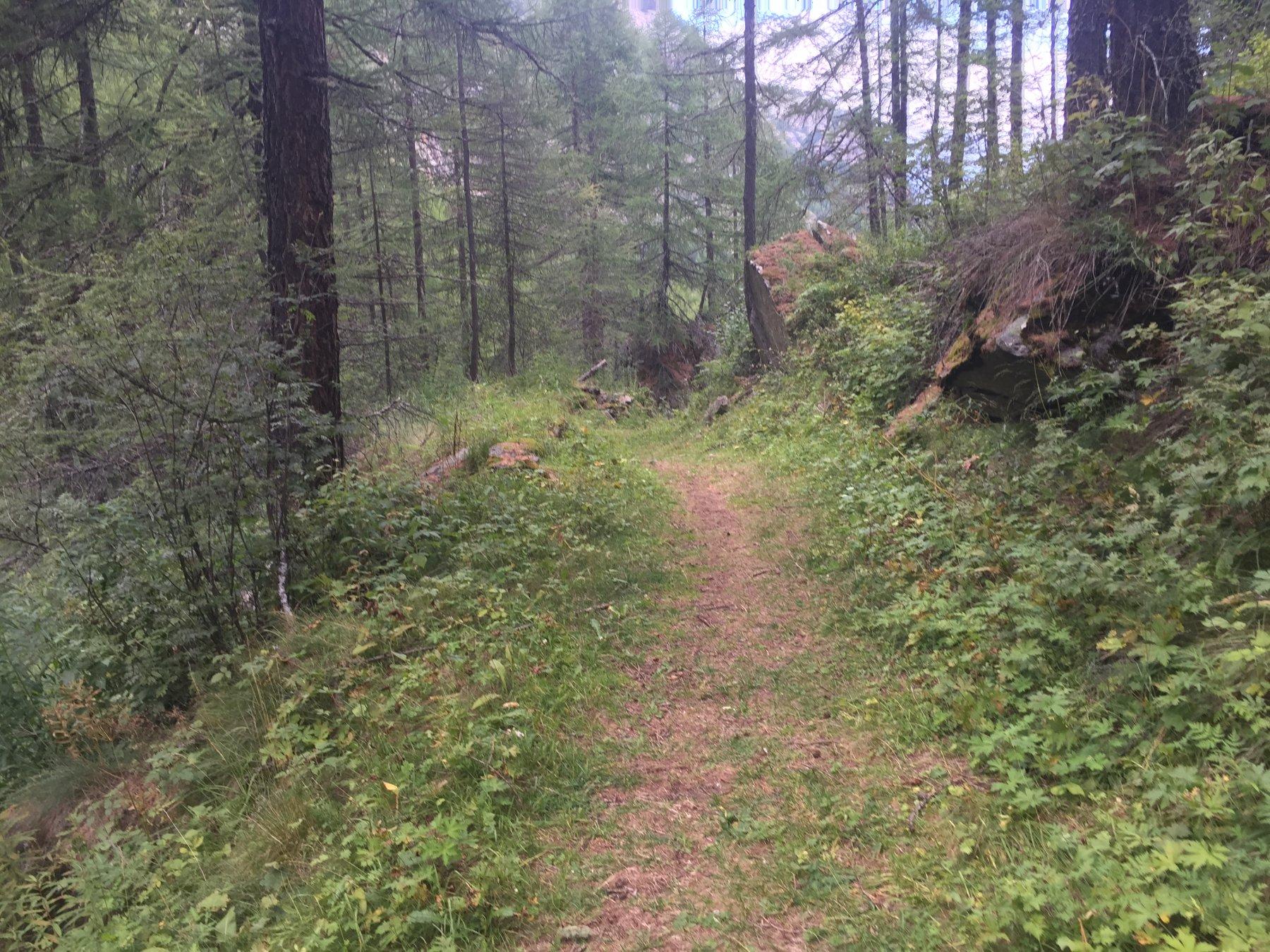 Il sentiero 2