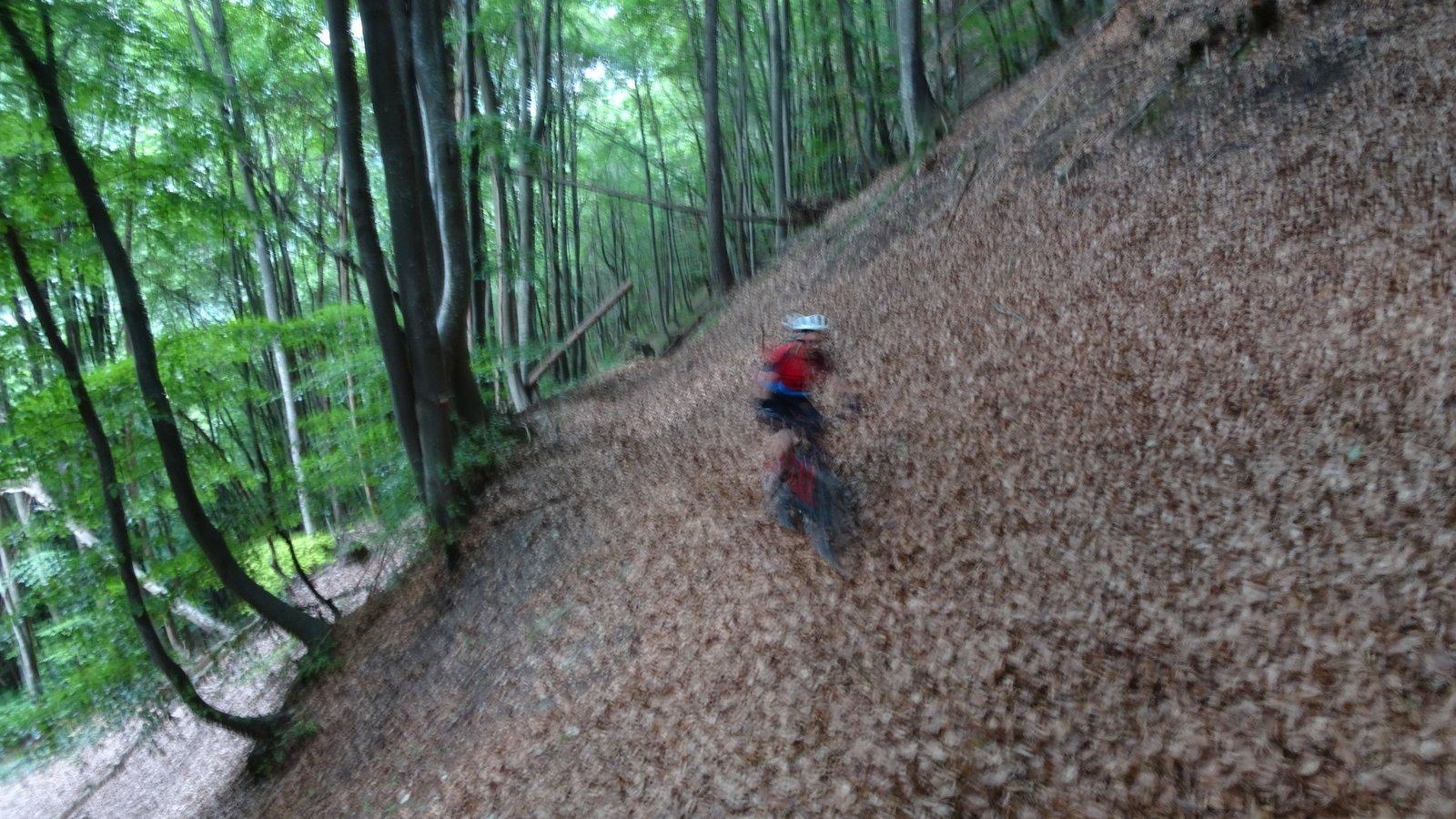 Nel bosco verso Lottulo , attenti alle pietre nascoste