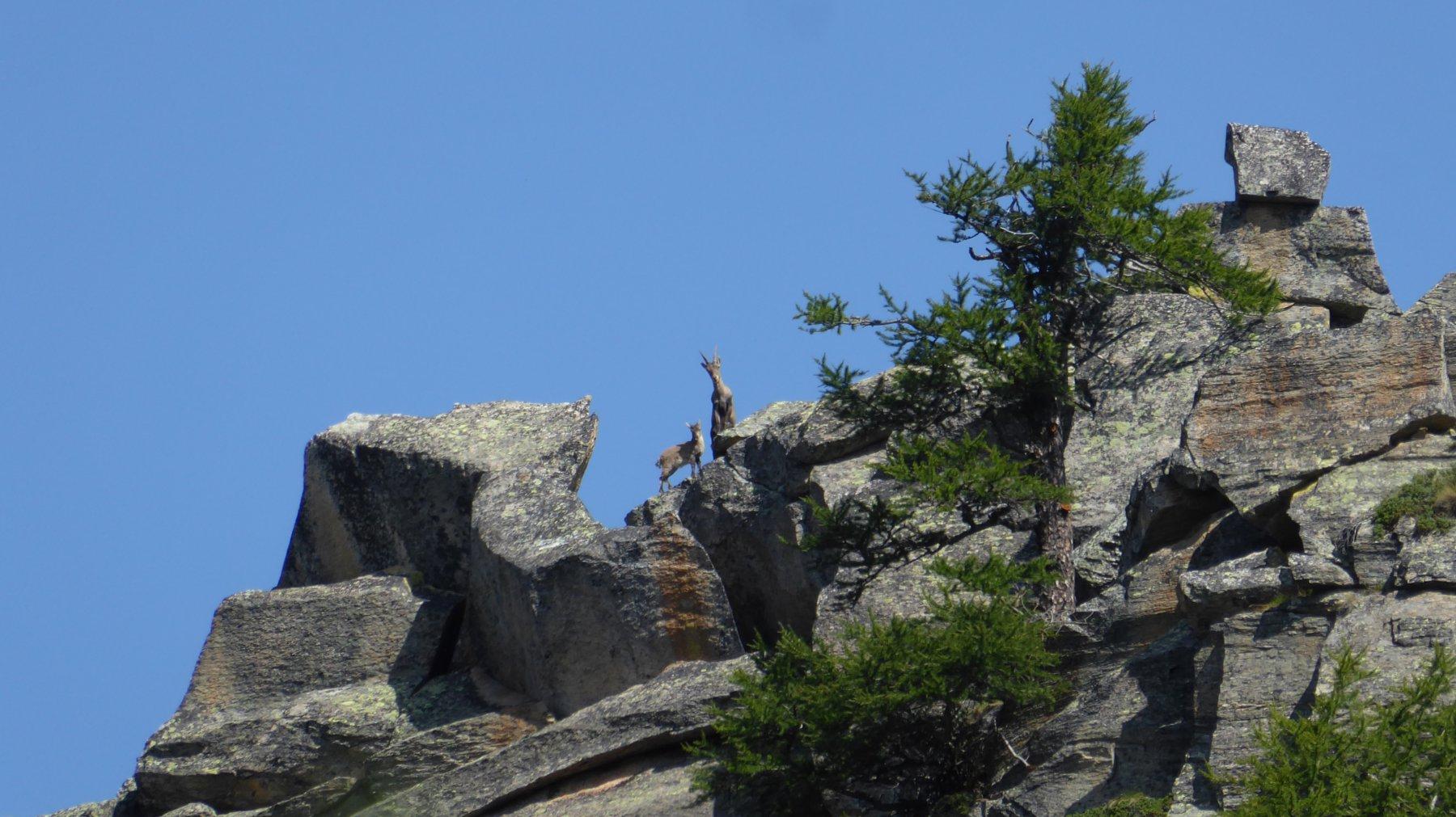 Pruset (Cima) da Ceresole 2017-08-19