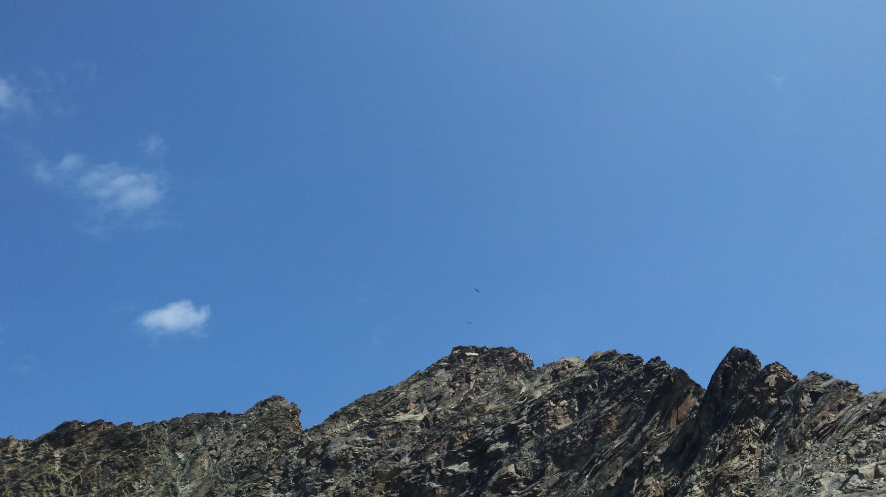 due aquile sulla Punta Nera
