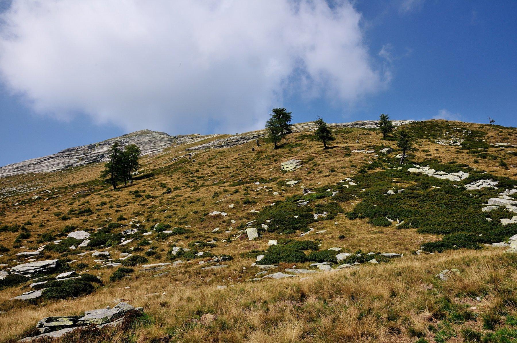 Versante da salire visto da Alpe Tenda