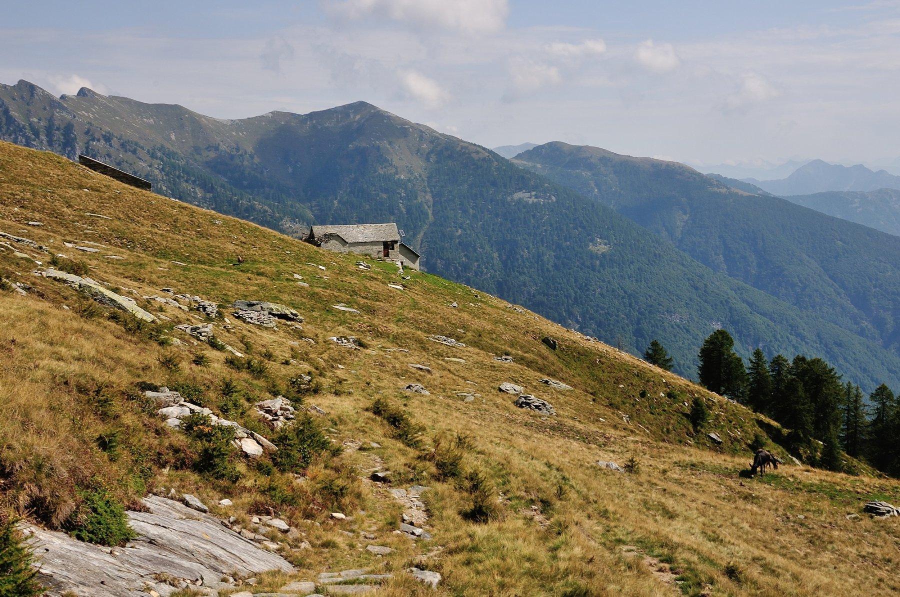 Alpe Tenda