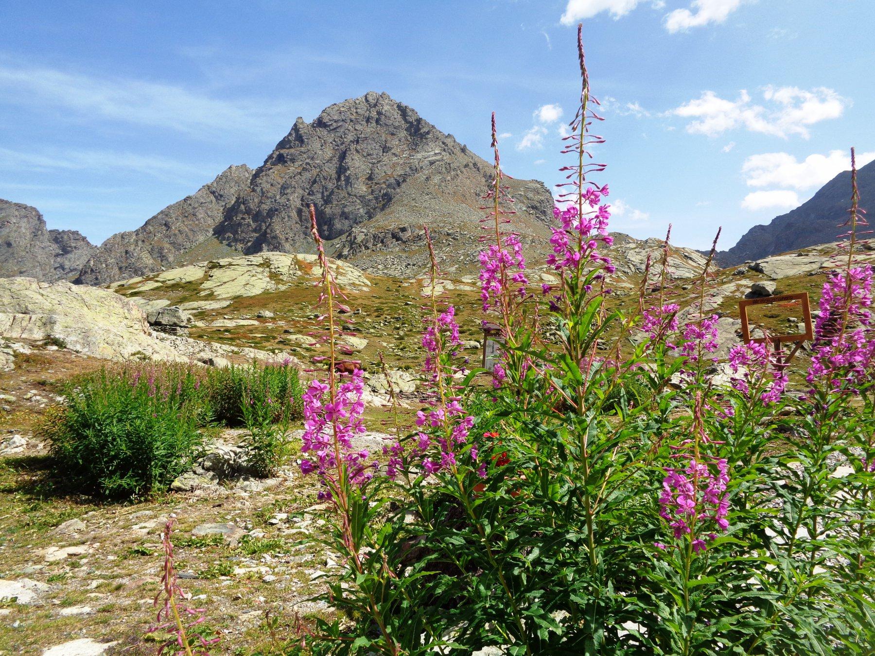 Monte Granero dal Rifugio