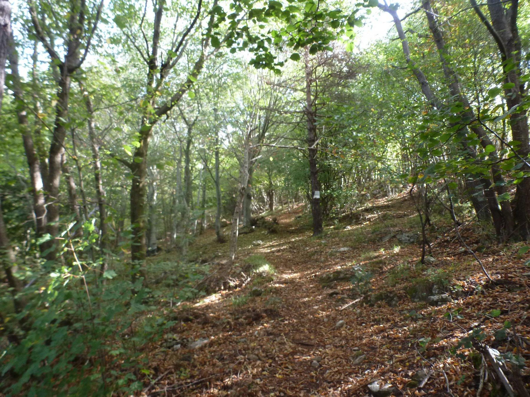 bellissimi boschi