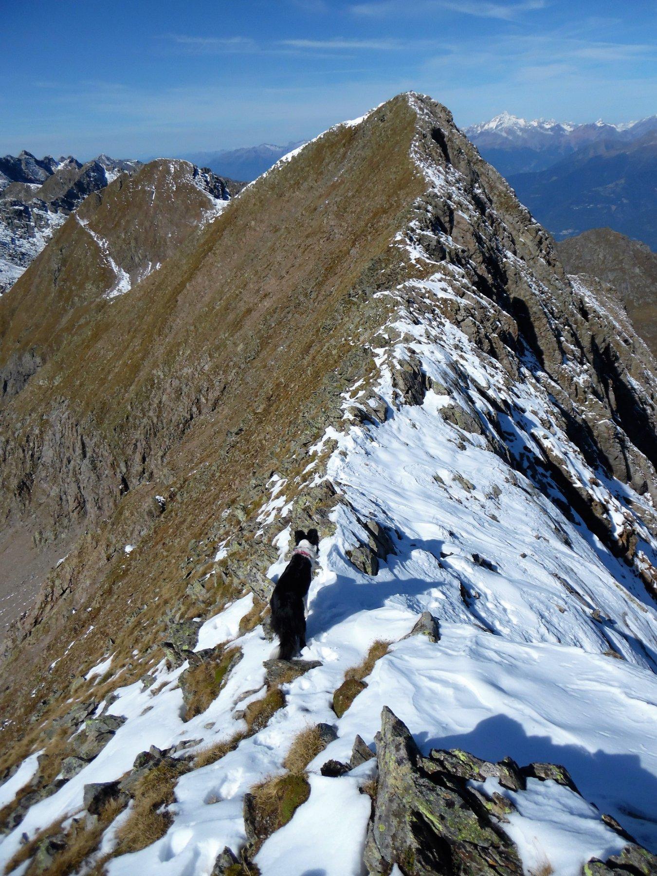 Cresta dal Torena all'antecima (ritorno)