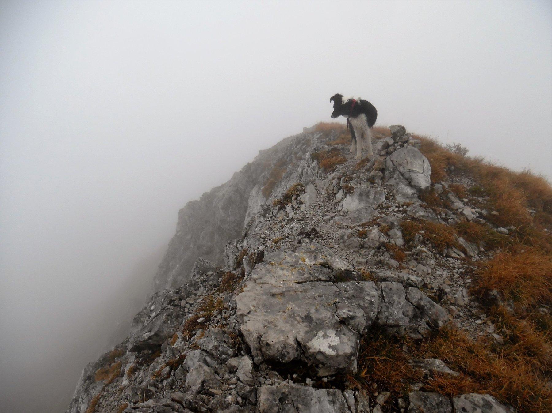 Pizzo di Corzene 2196 m, ometto