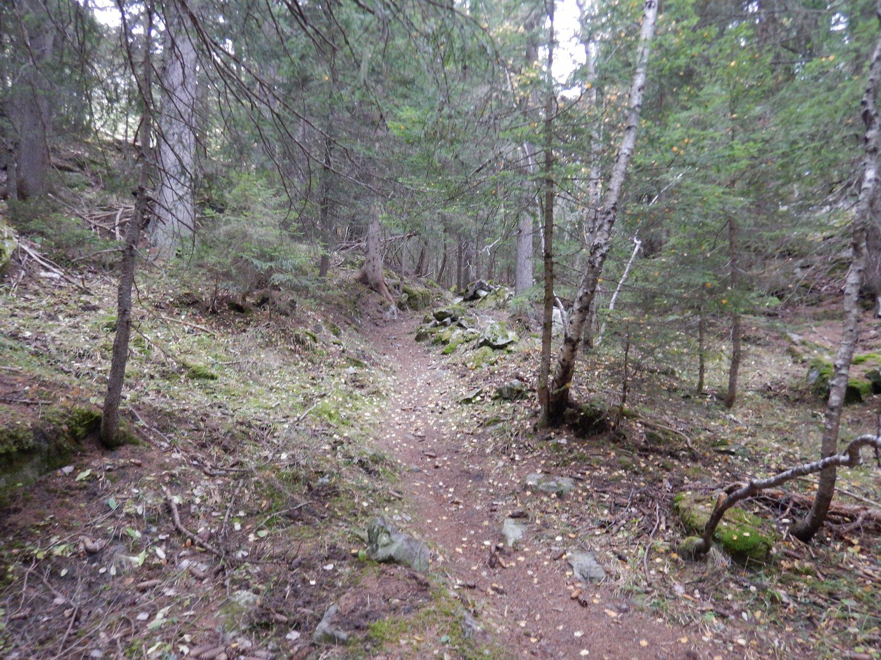 il sentiero 14 nel bosco