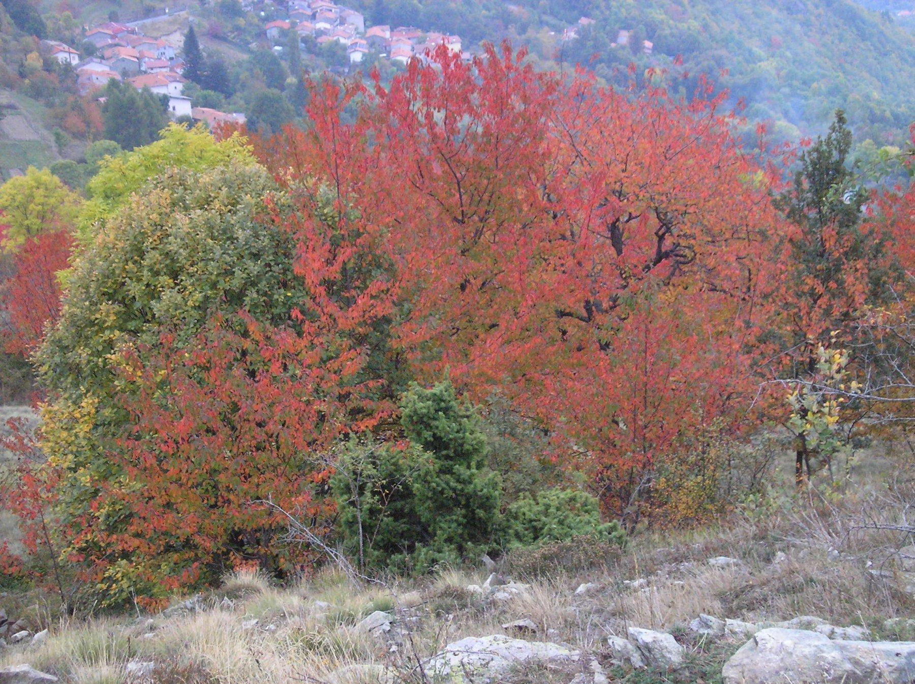 I colori dell'autunno 2