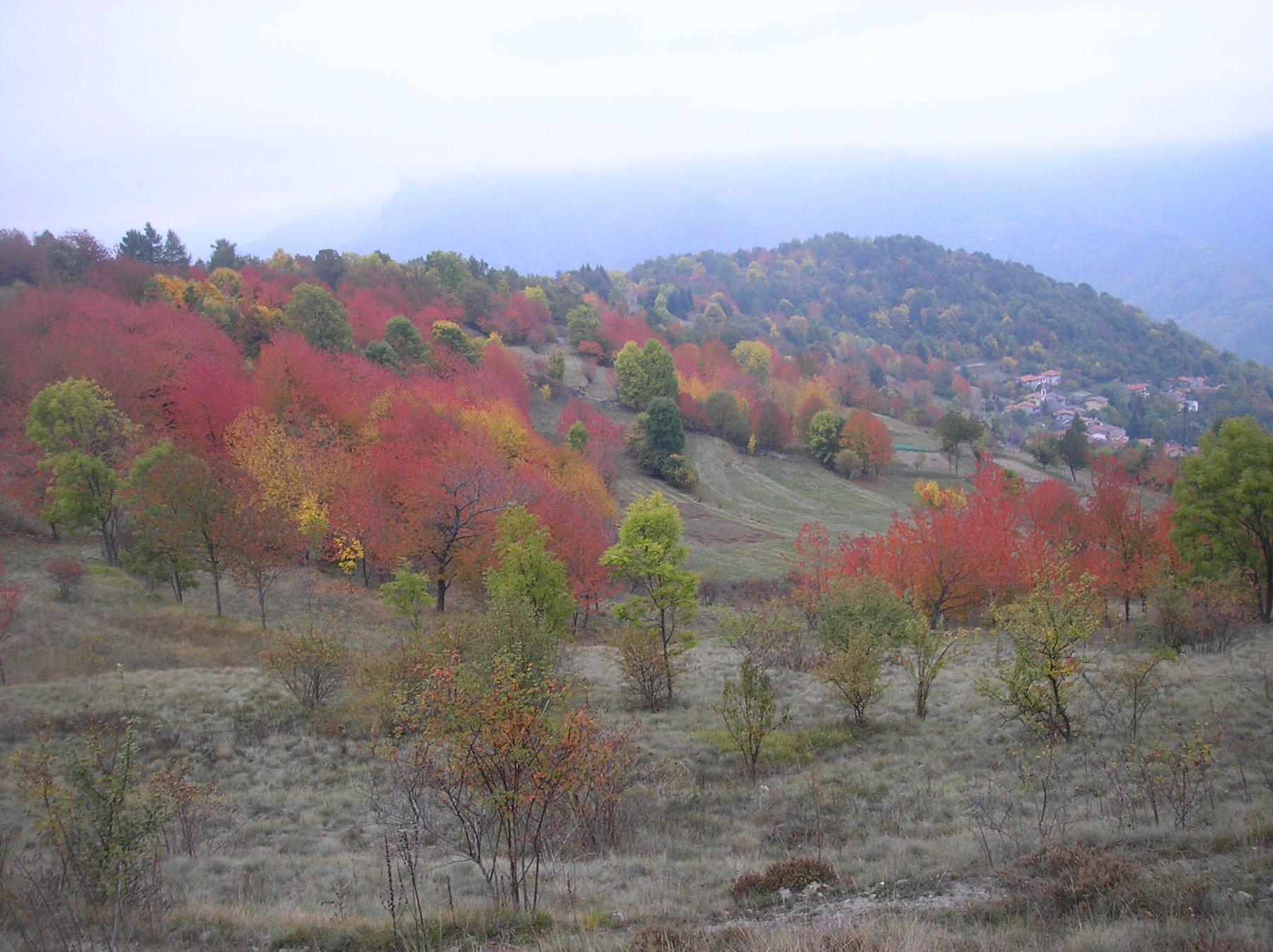 I colori dell'autunno 3