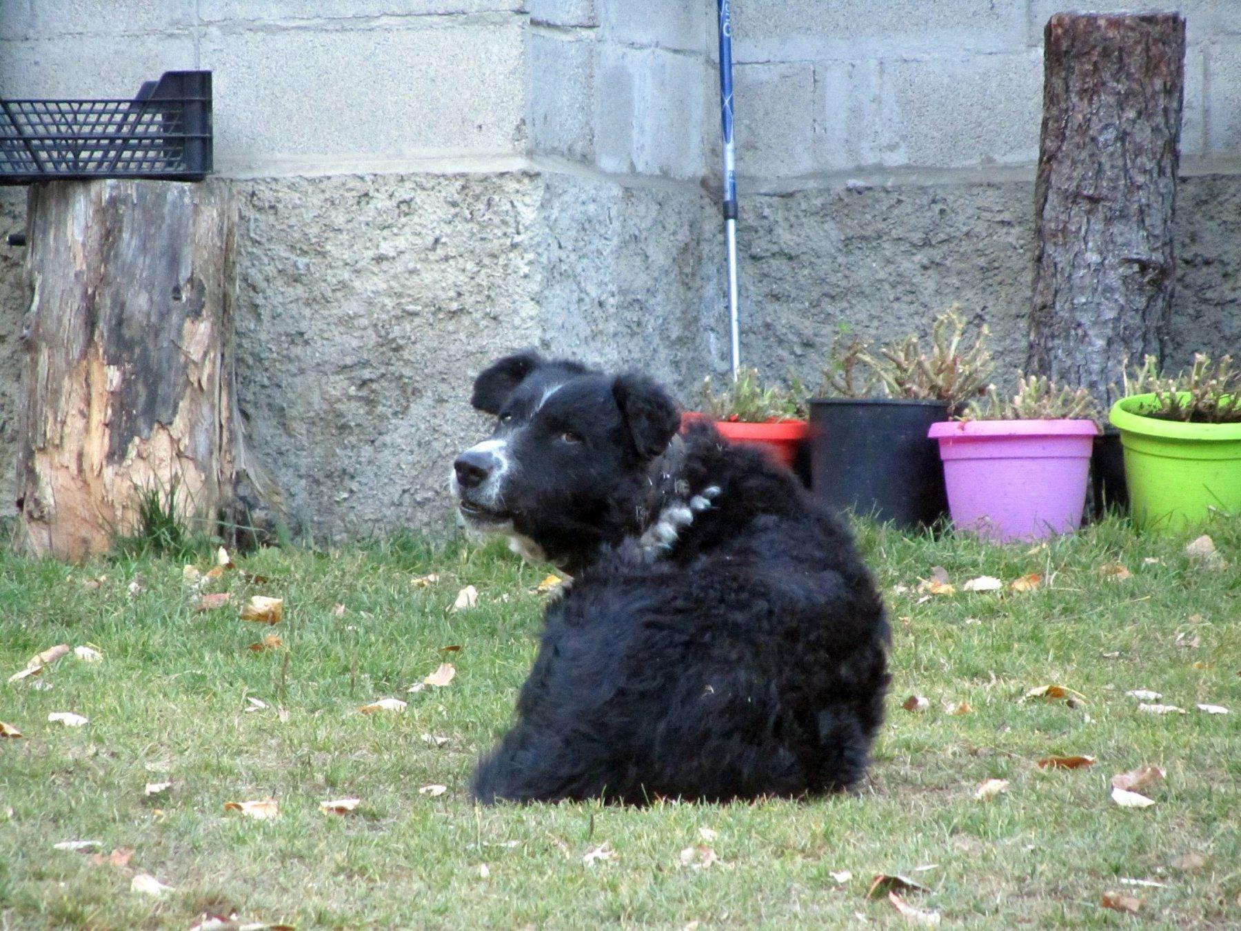 il cane del margaro