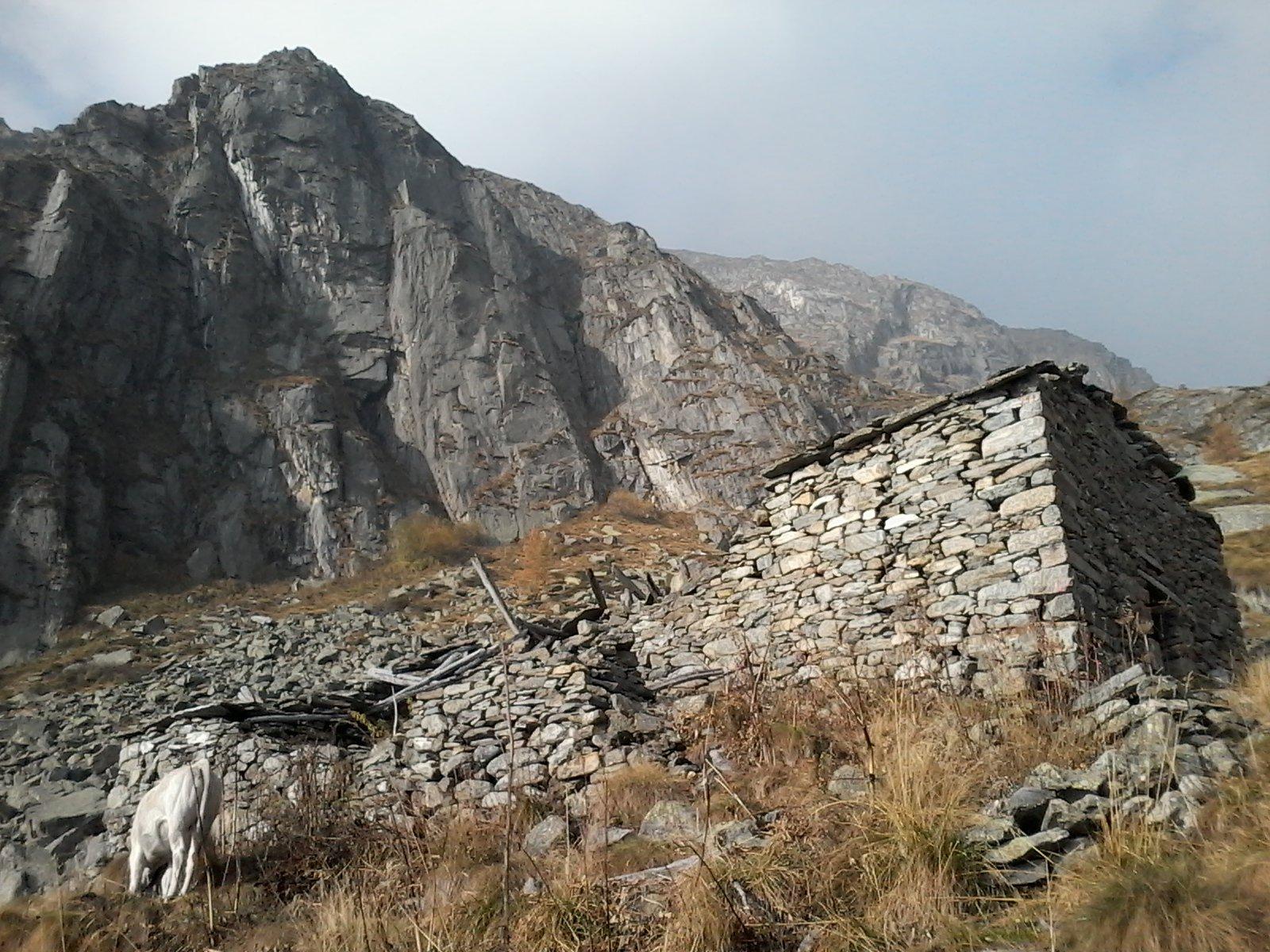 L'Alpe Canaveia; sullo sfondo la Costa Cucuei