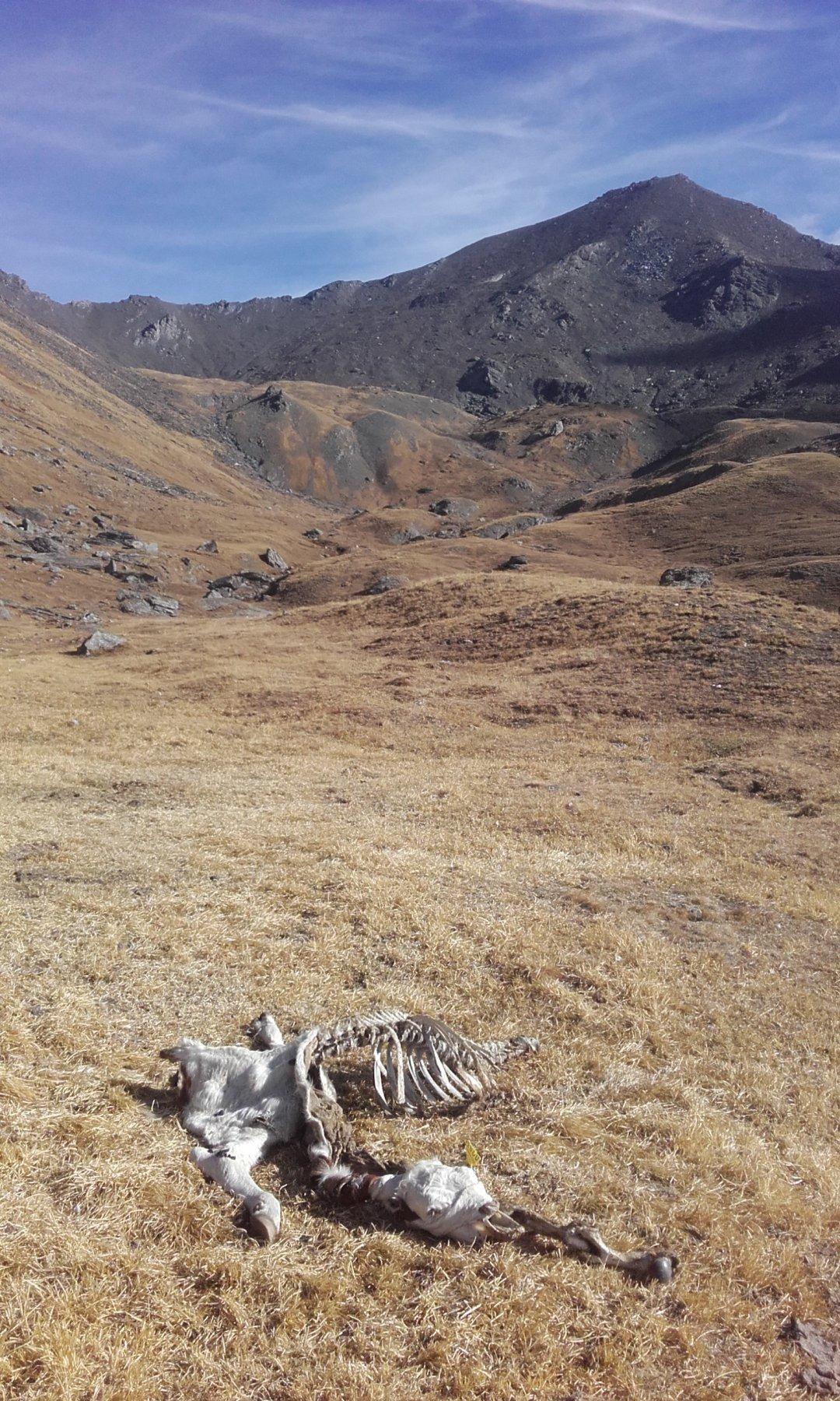 zona frequentata dai lupi