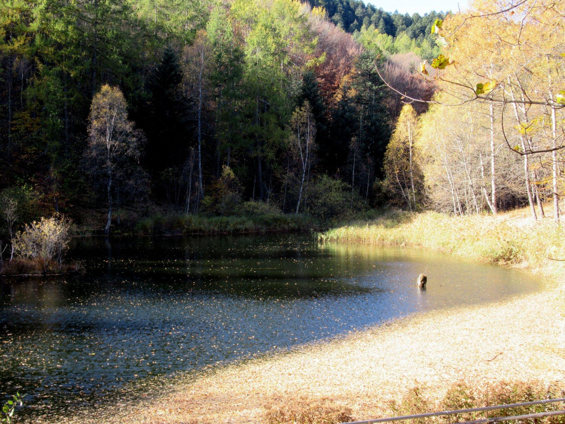 Il lago delle rane