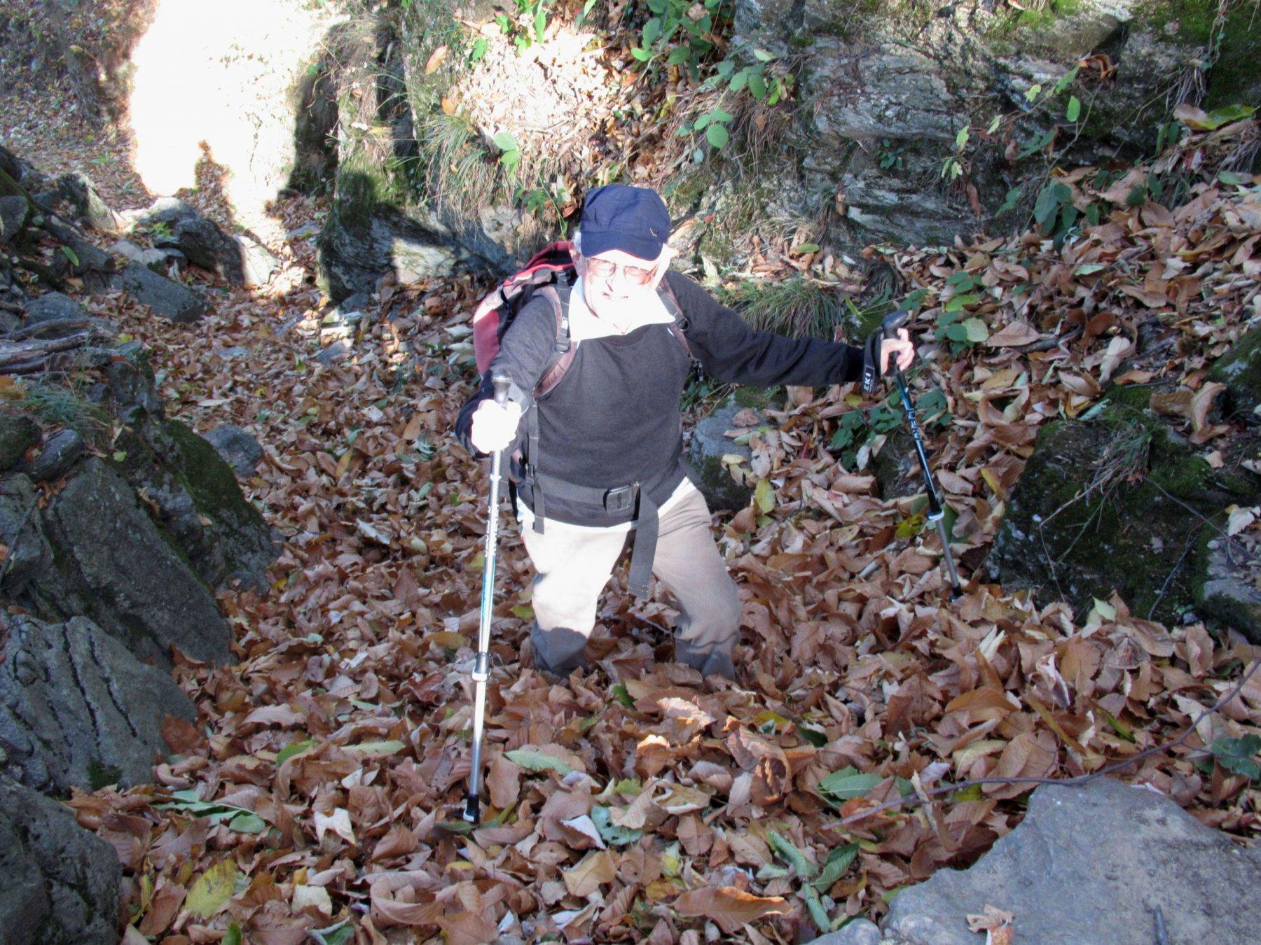 un po' di foglie sul sentiero ....