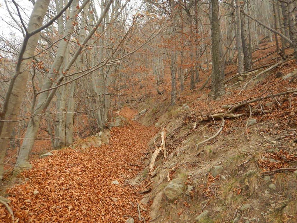 Sentiero sopra pilone Miloro