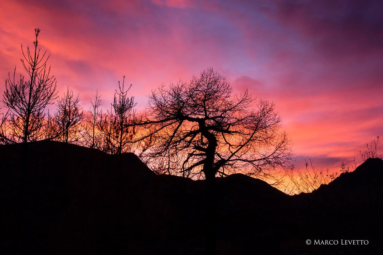 Larici al tramonto