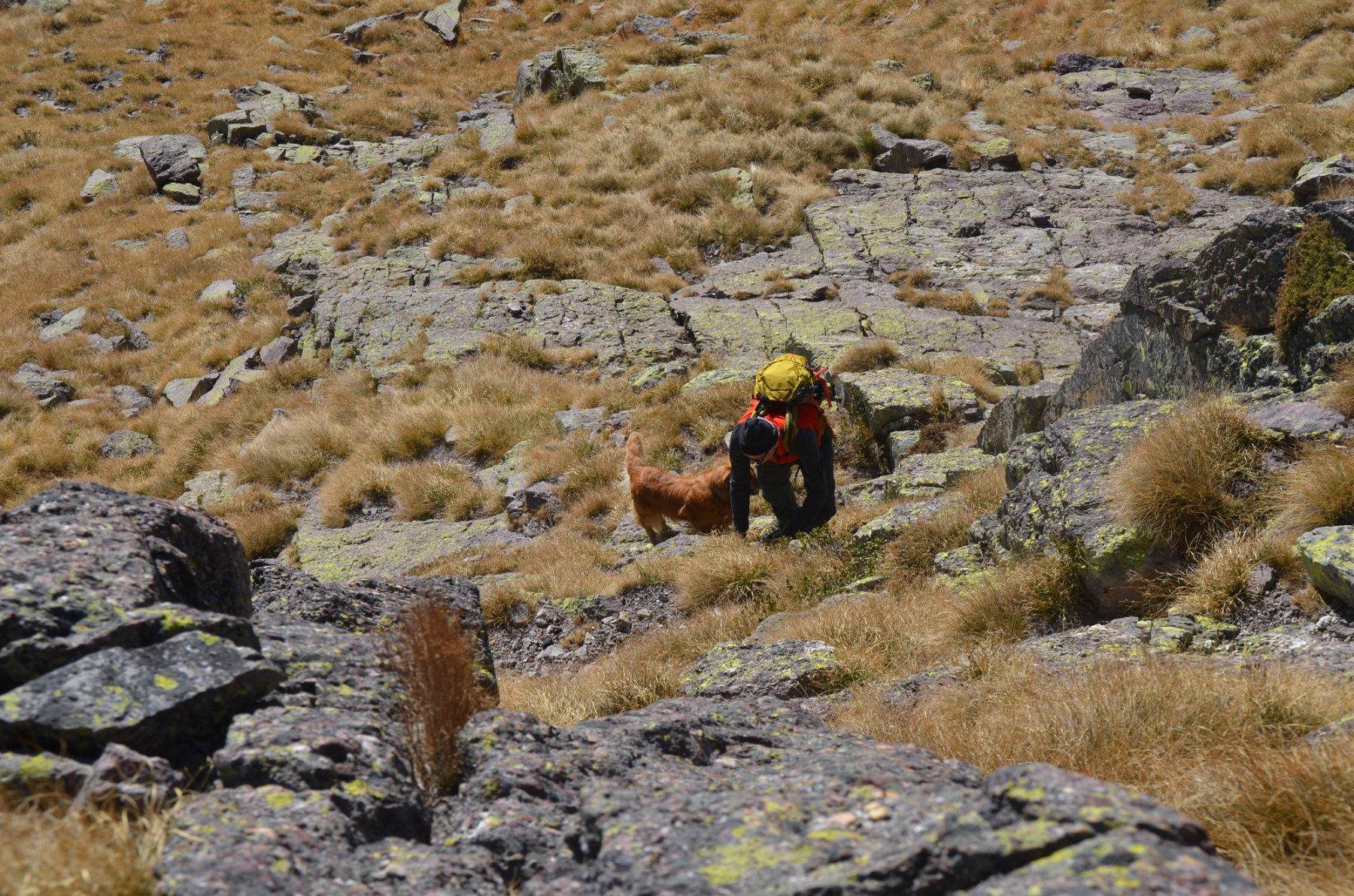 Salita alternativa anche per cagnoloni alpinisti