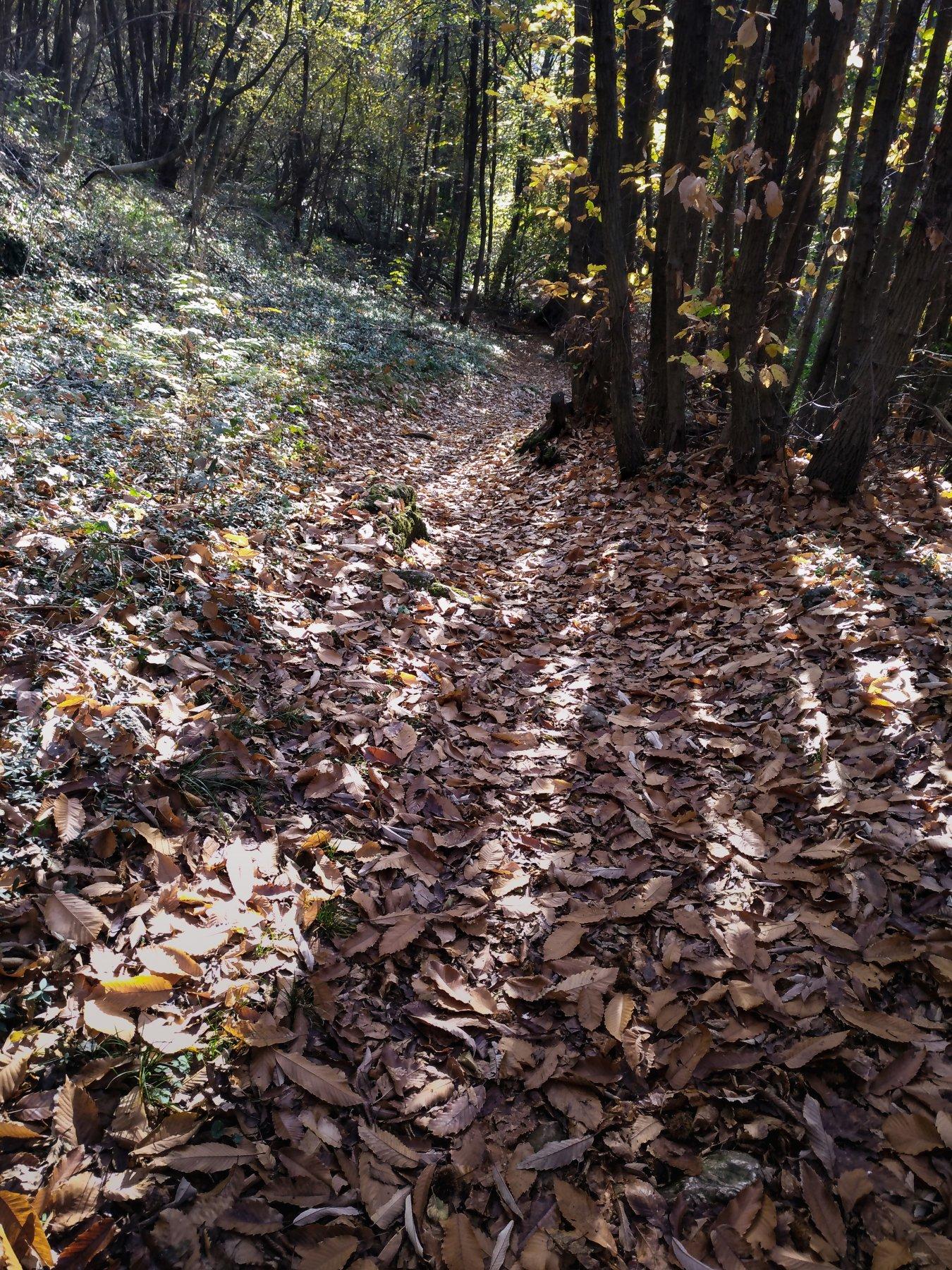 traversata nel bosco