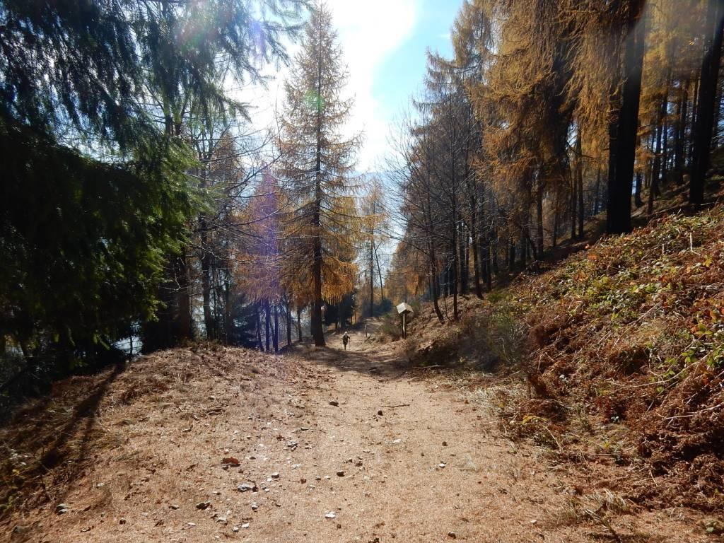 Nei dintorni della seconda bacheca del sentiero del Castlas
